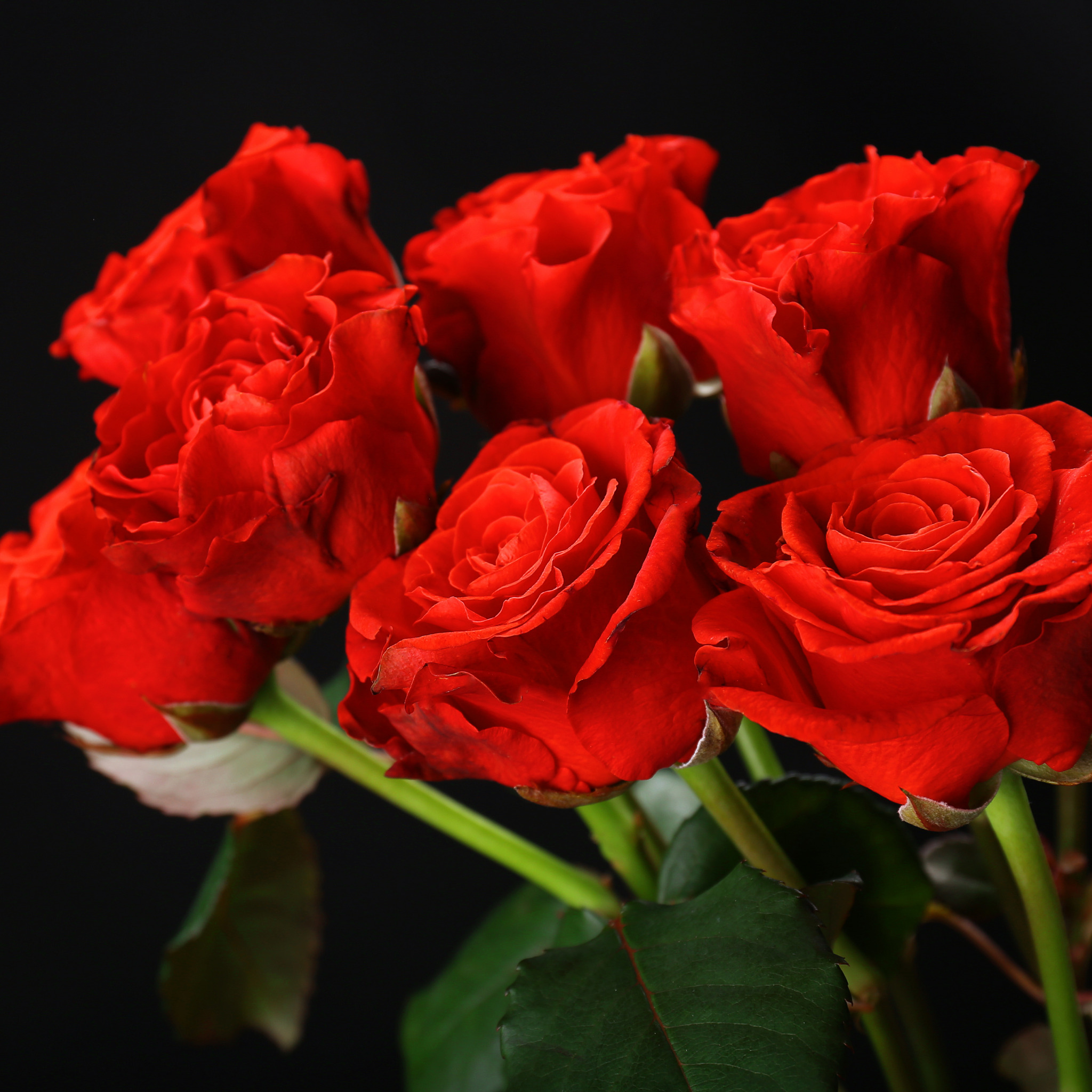 Музыкальные открытки с розами