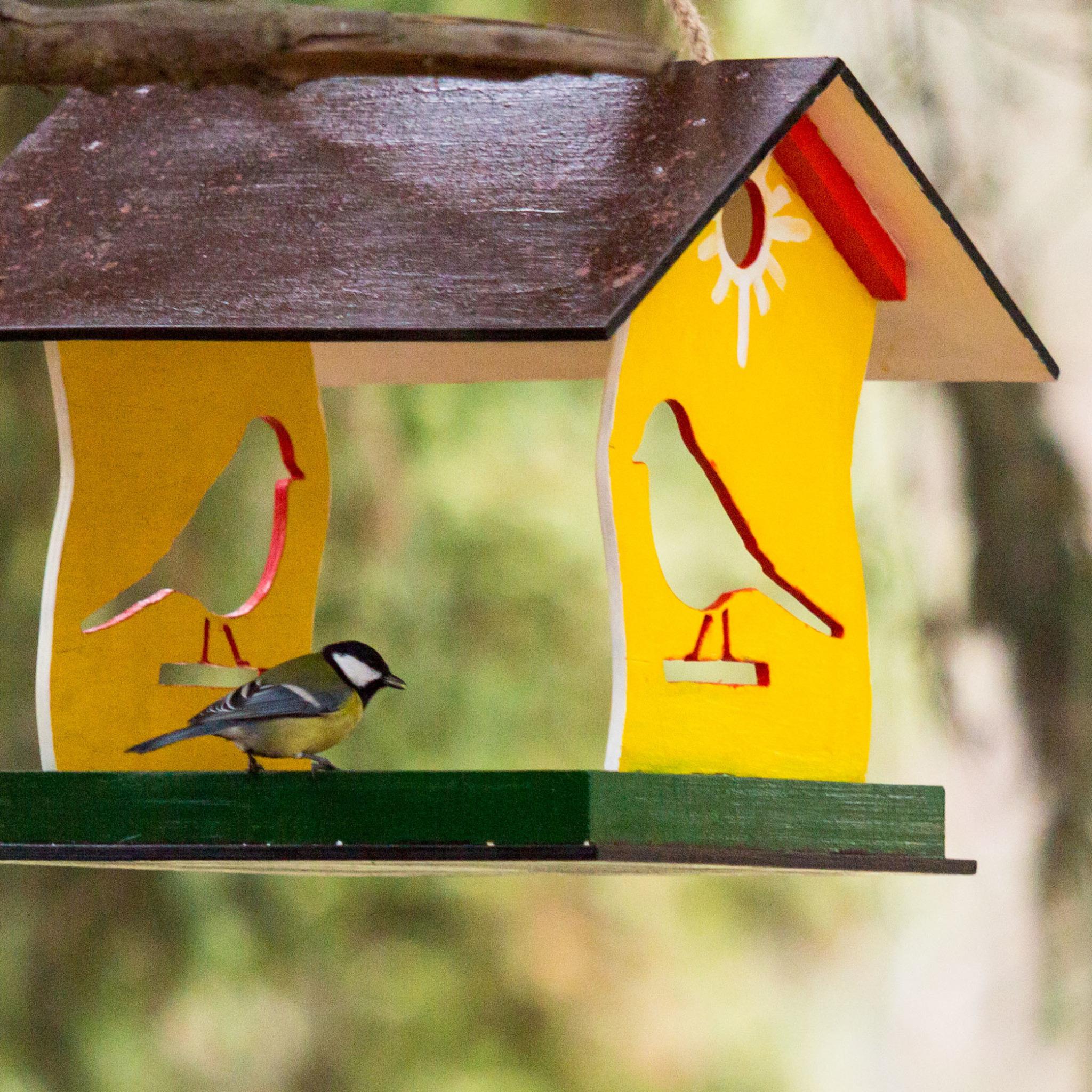 Кормушек для птиц картинки для детей