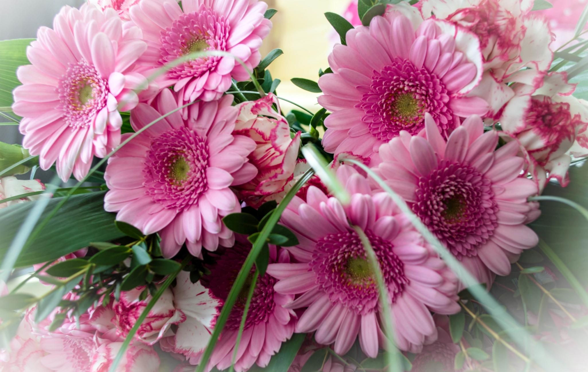 Картинки с днем рождения женщине цветы герберы