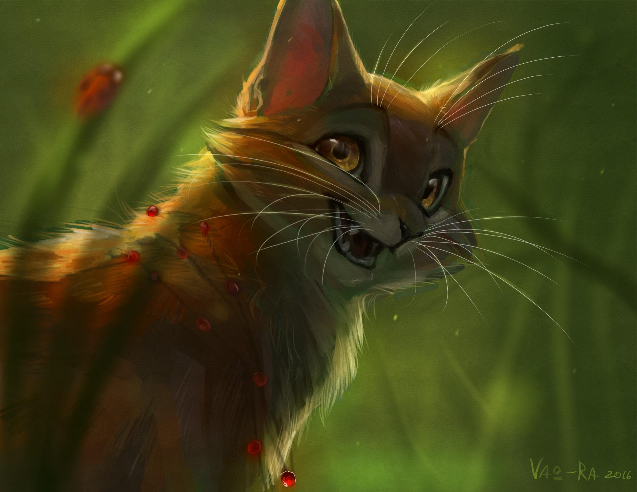 Для, картинки с котами воителями на рабочий стол