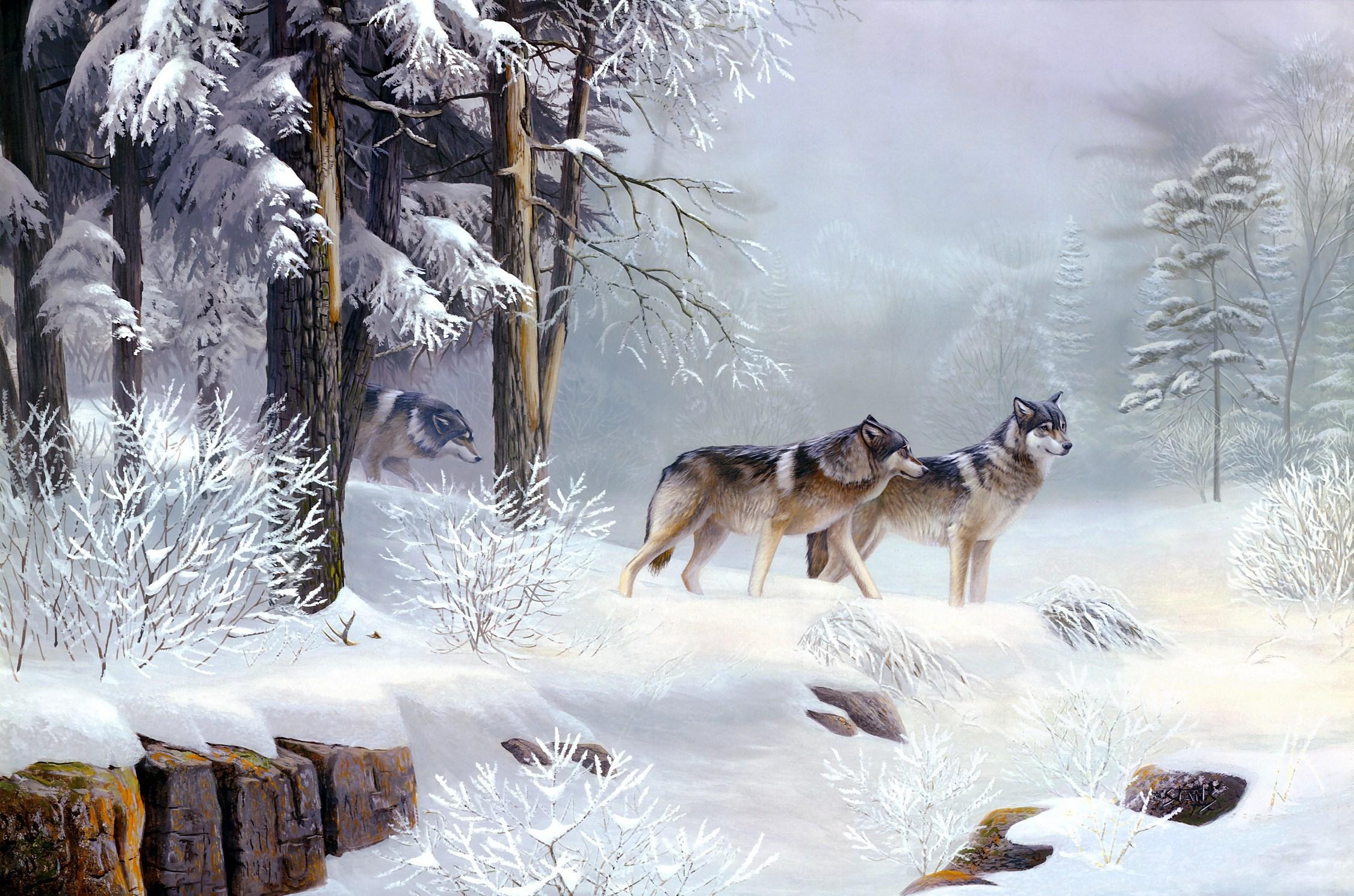 тех фотообои с зимним лесом волками белыми совами отличие прочих видов