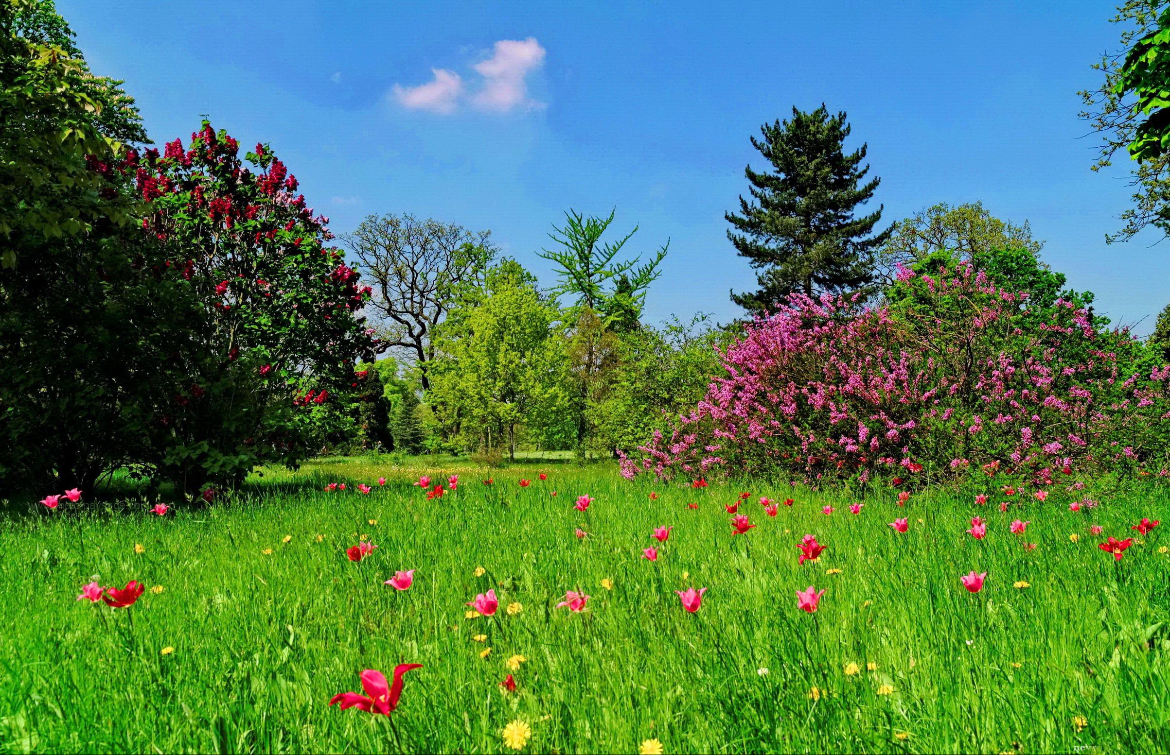 луг сад дворик трава  № 2691537  скачать