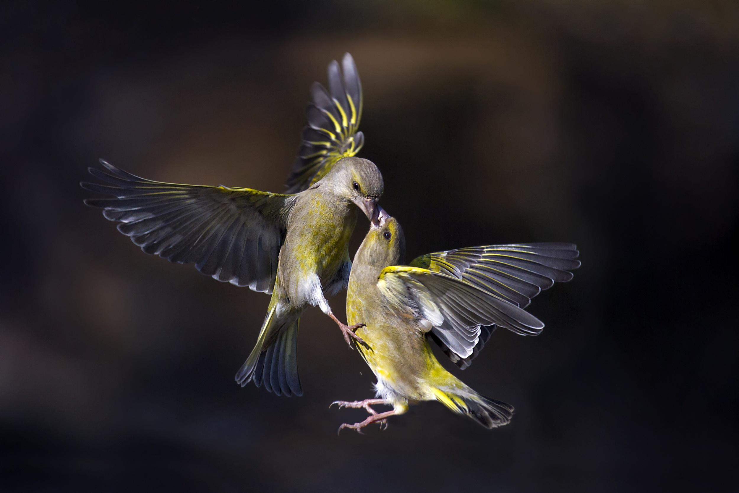 Ногтя прикольный, картинки красивых птиц в полете