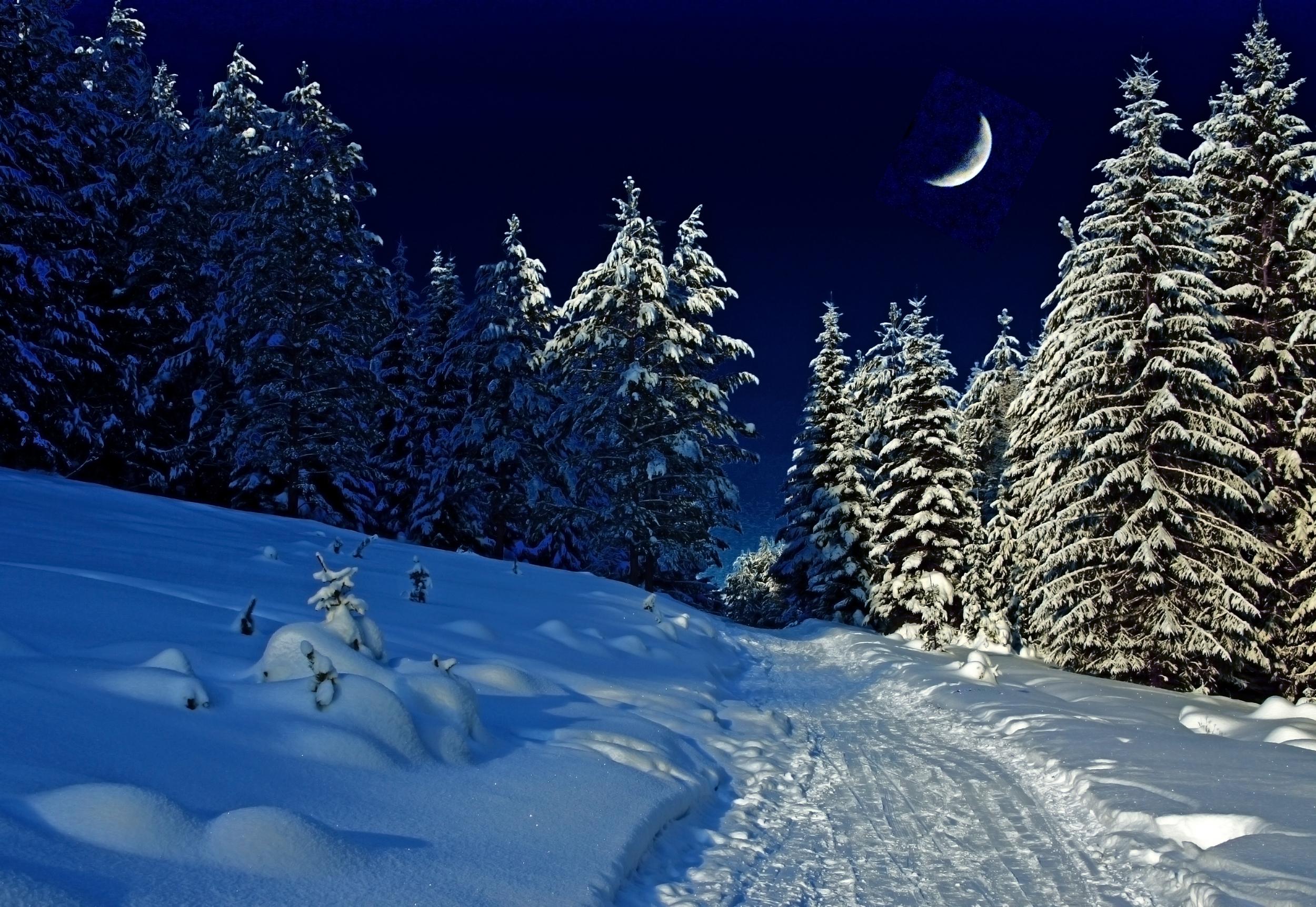 Картинка зимняя ночь в лесу