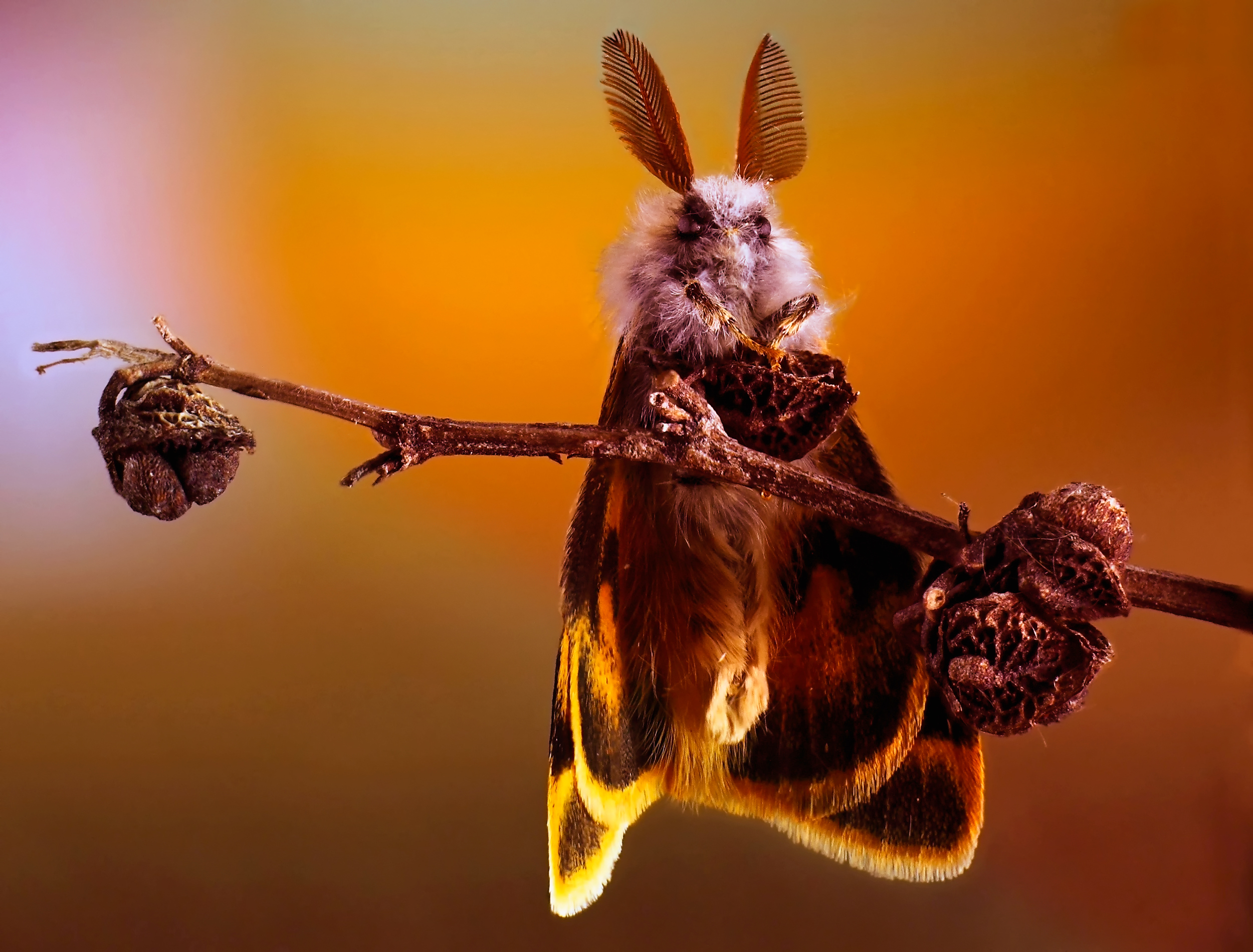 Картинки бабочки прикольные, прикольные картинки