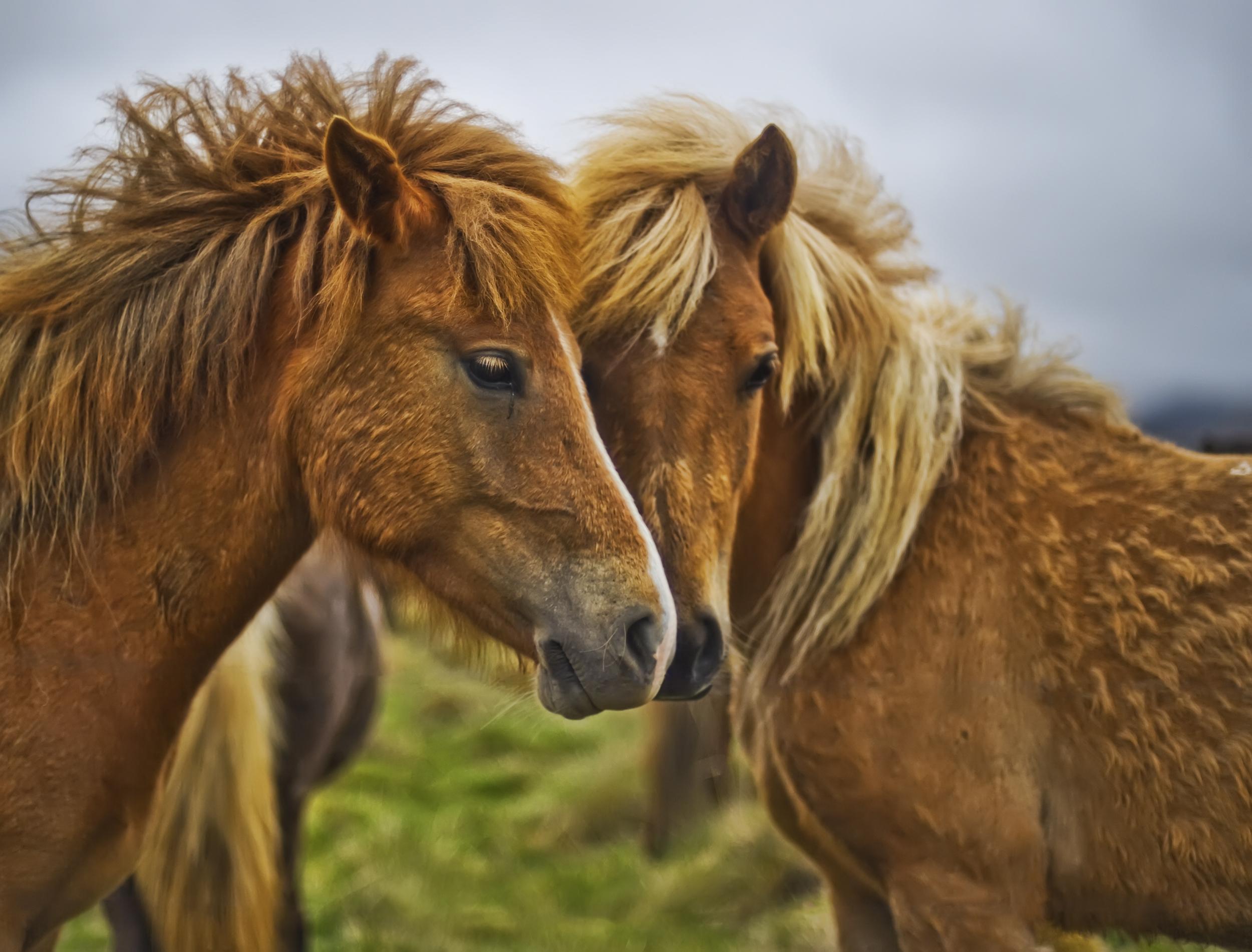 лошадь с гривой  № 3127175 загрузить
