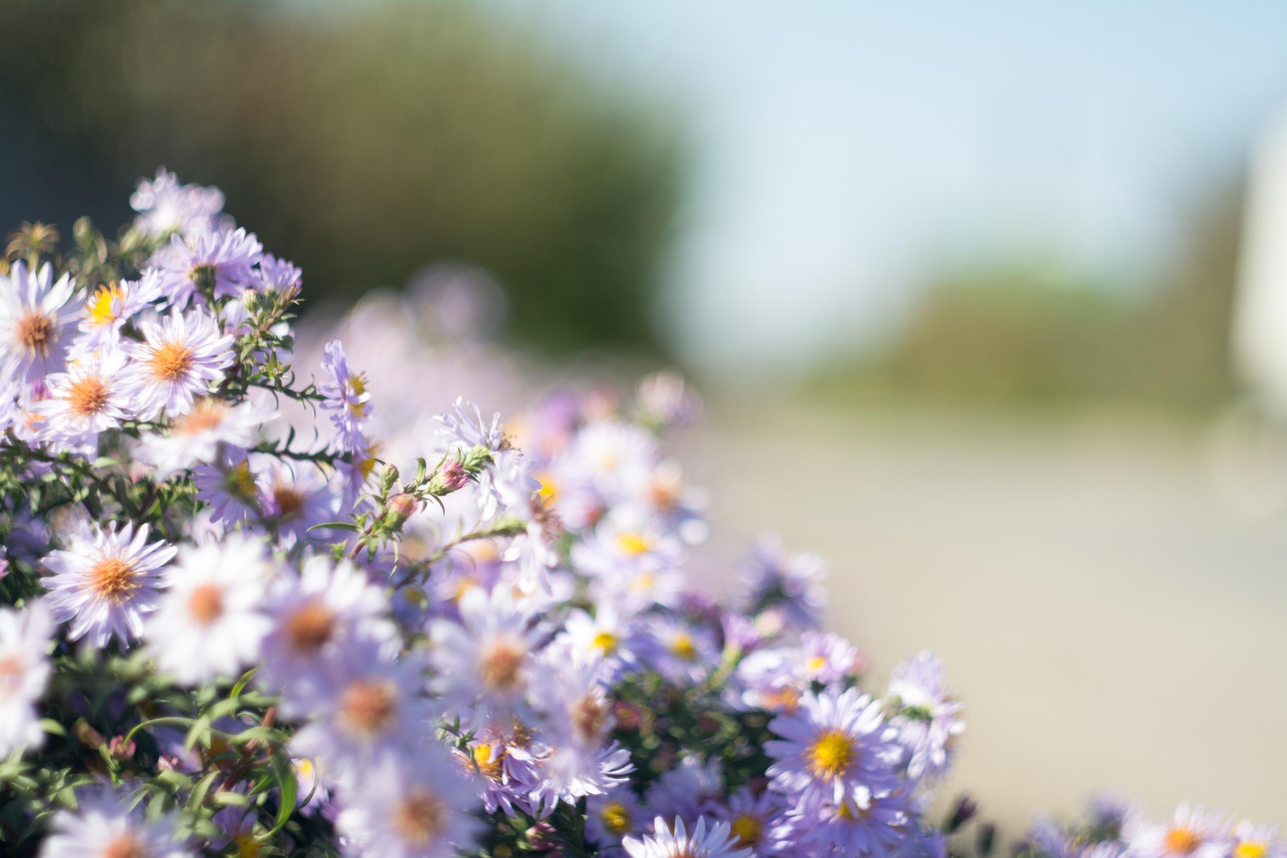 Букеты полевые цветы макросъемка, цветов будве