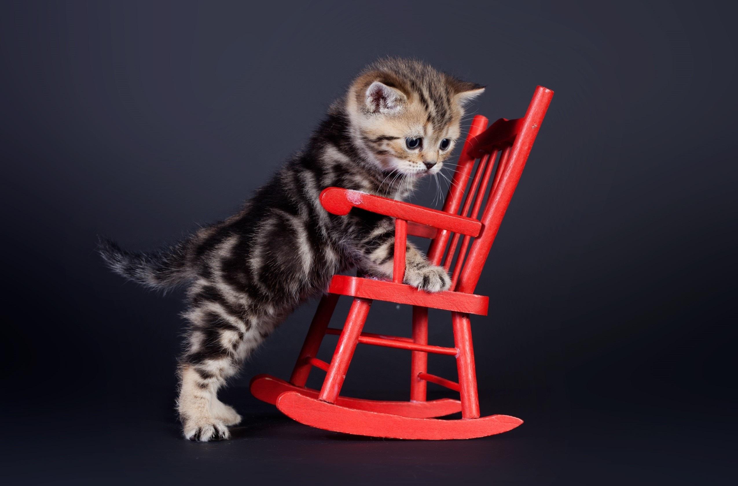 кот животное кресло морда  № 1943847  скачать