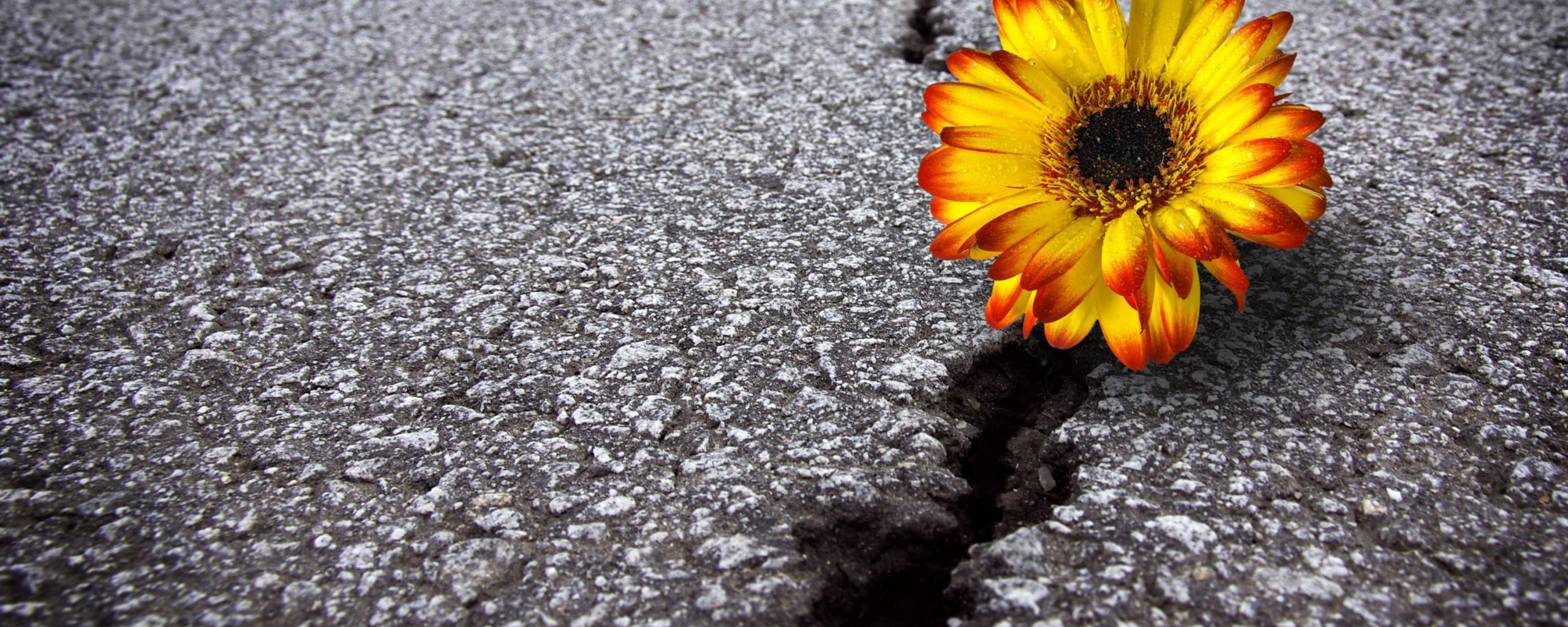 Красивые картинки цветок из асфальта