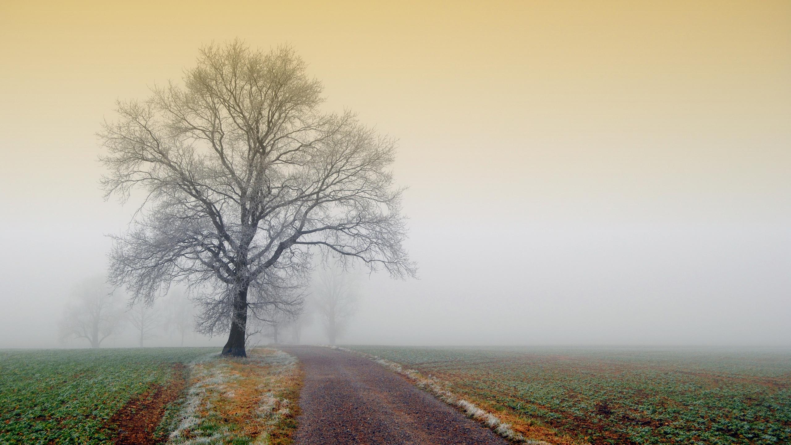 дерево дорога tree road  № 2404830 загрузить