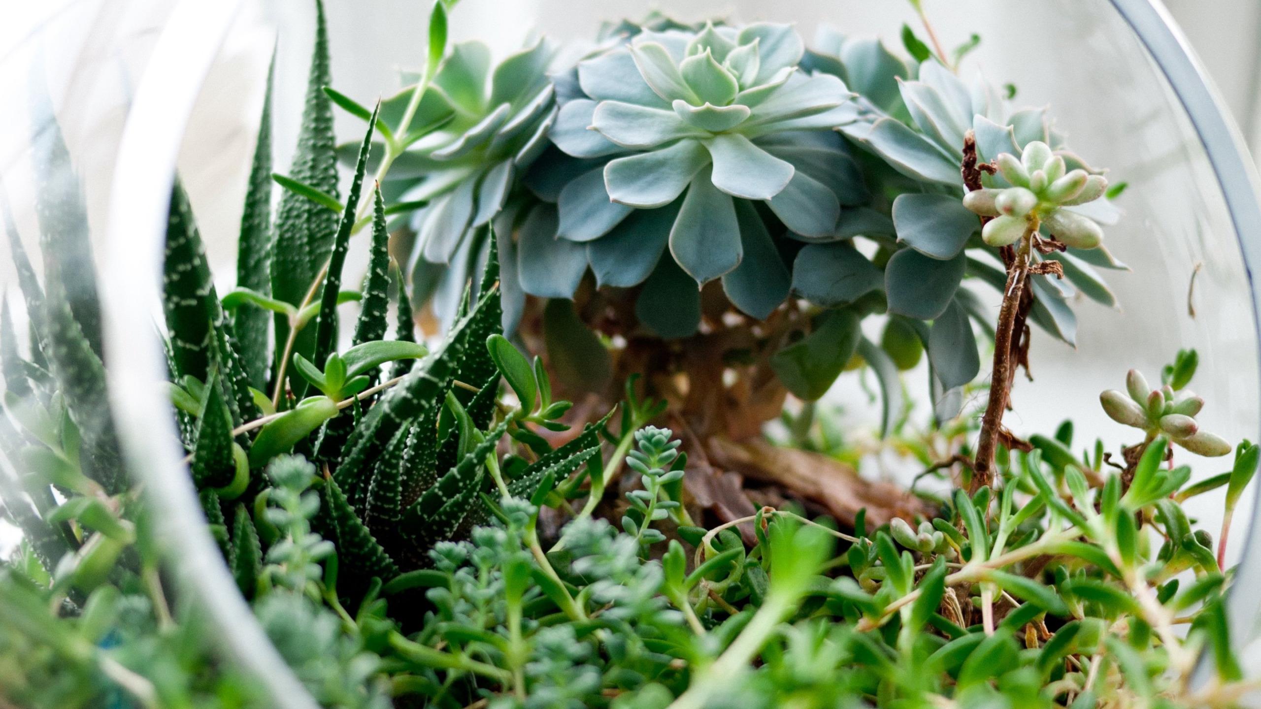 Композиции из кактусов и суккулентов