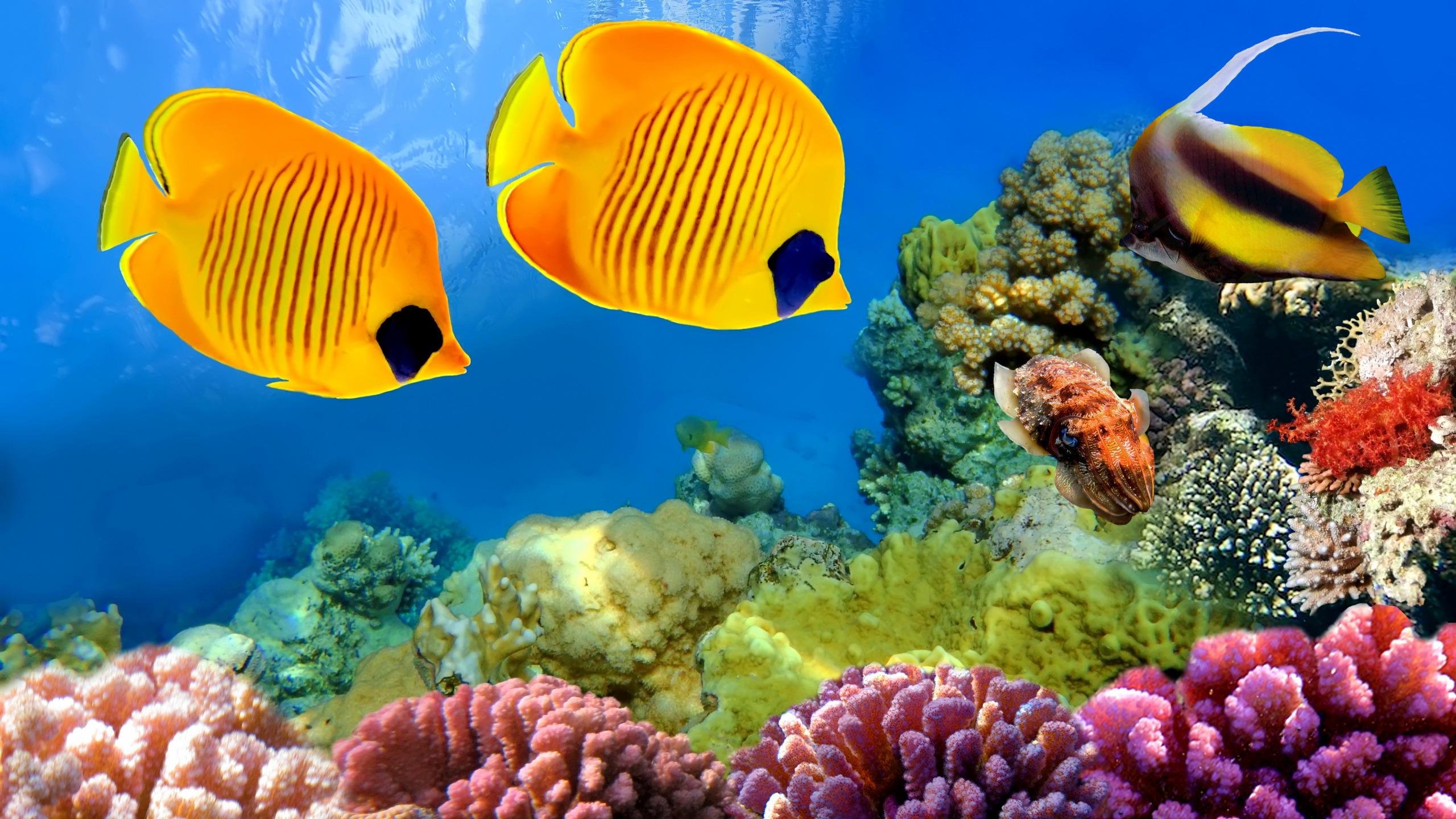 Желтая Рыба макро  № 1088210 без смс