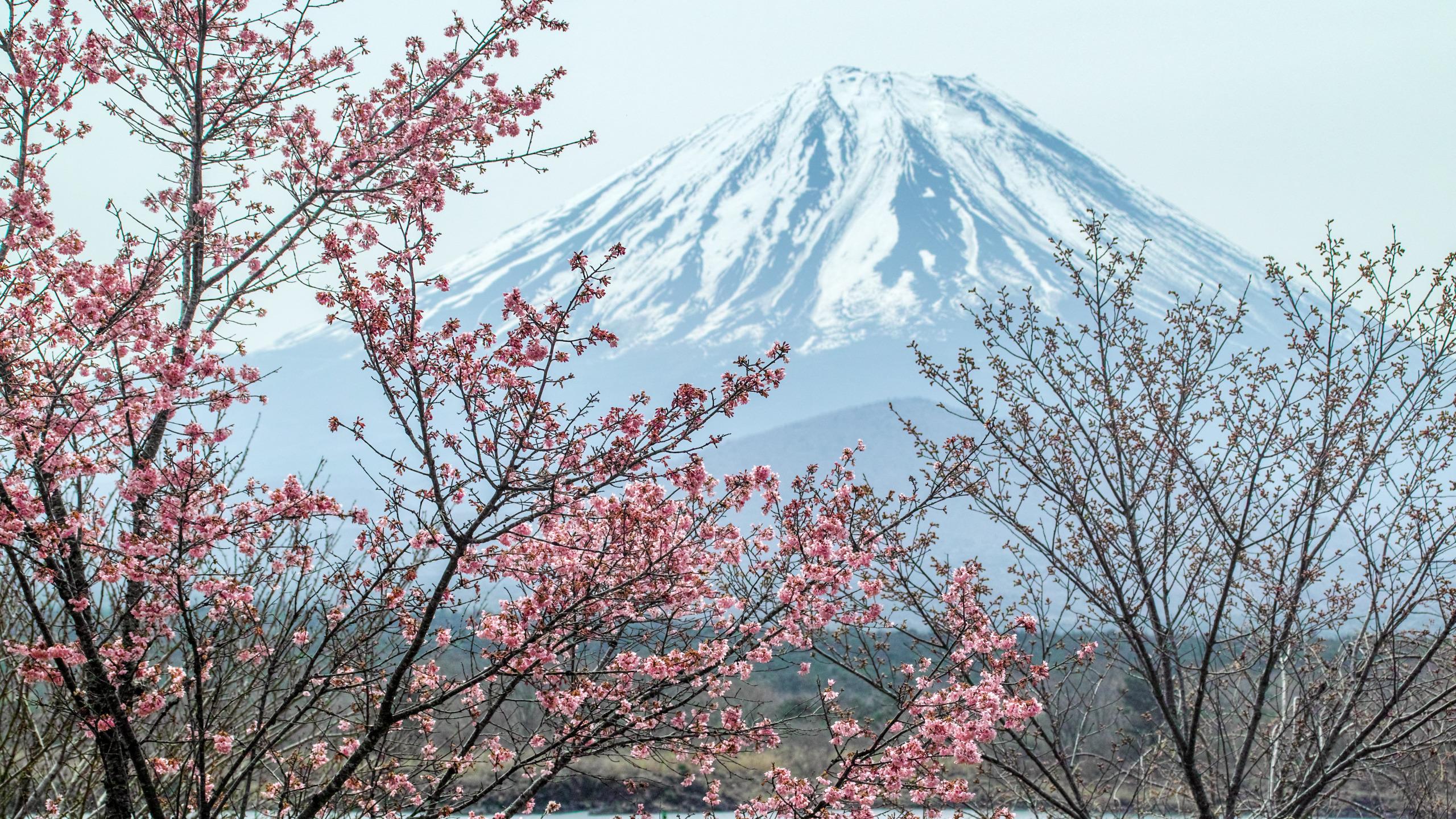 японский рабочий картинки