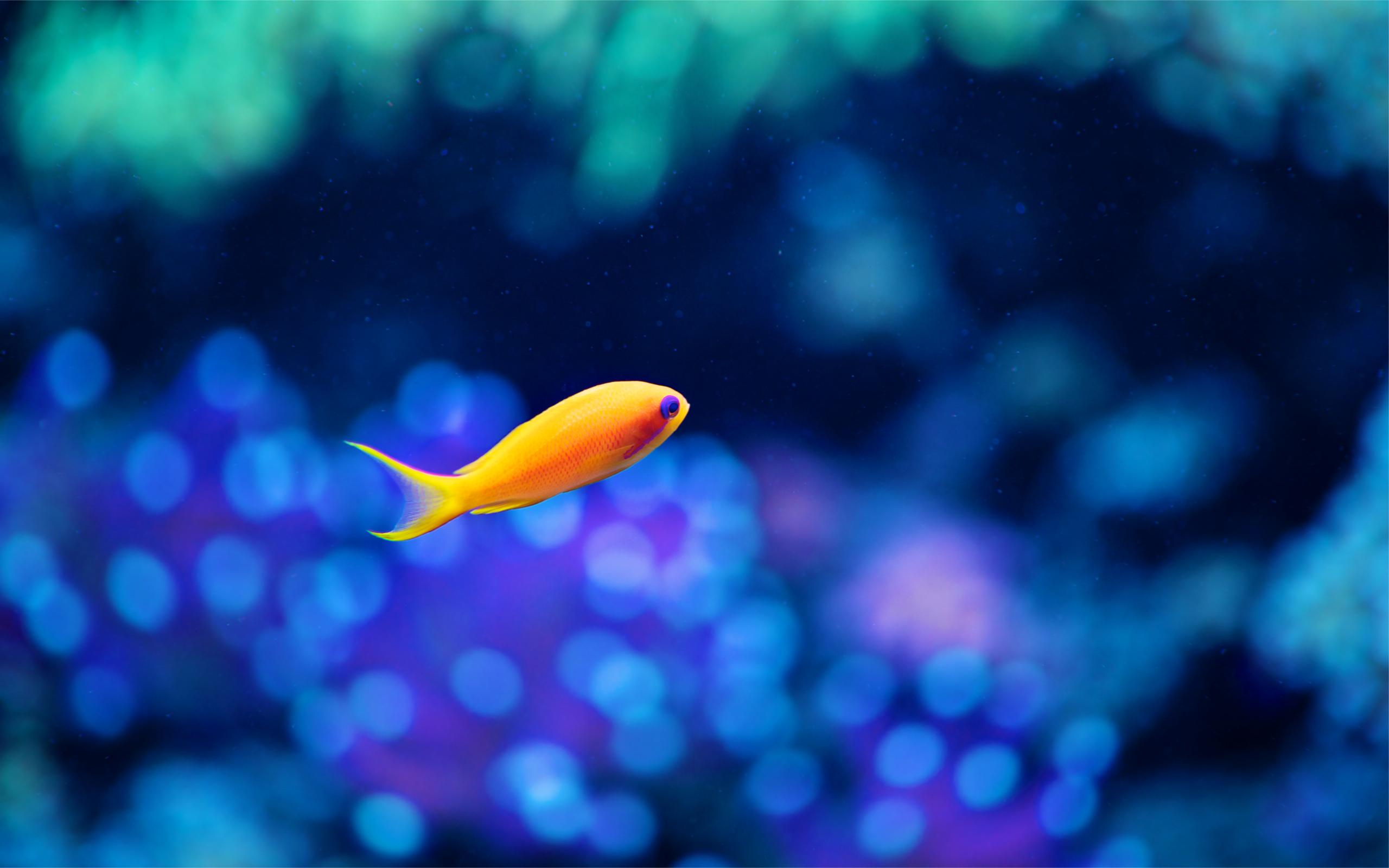 только фоновые картинки с рыбками подтверждаю, что ознакомлен