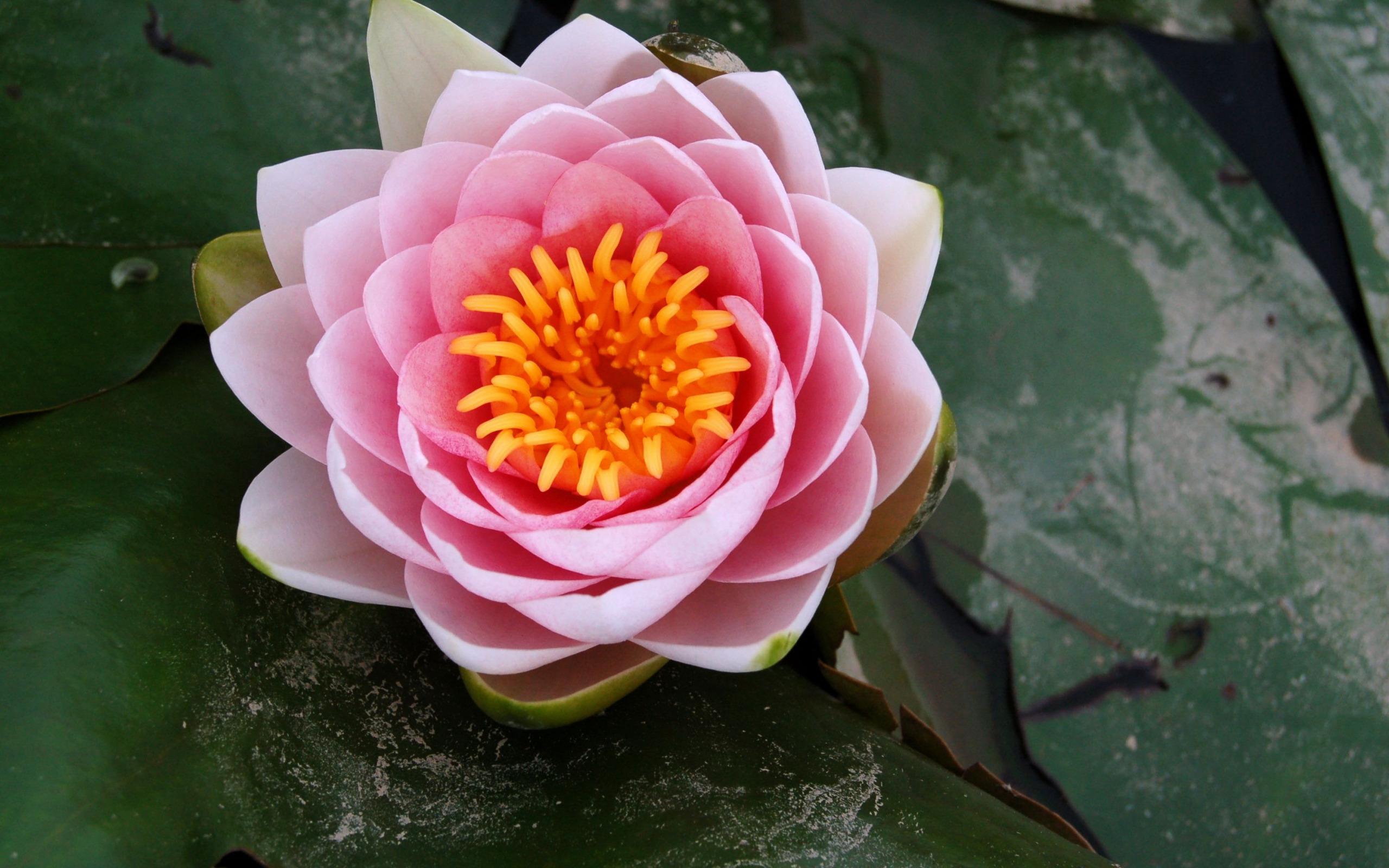 Картинка большой цветок