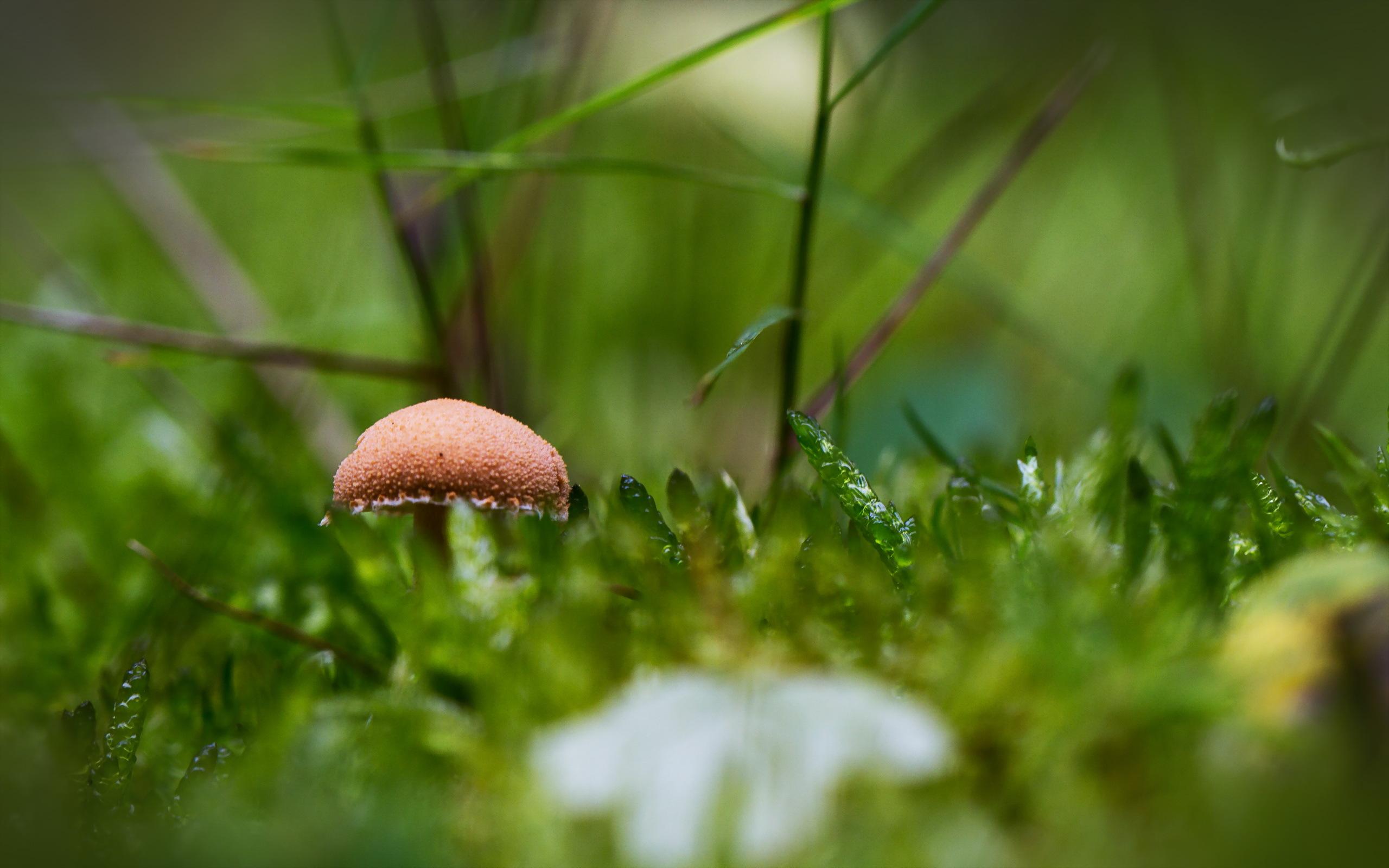 Прозрачный гриб  № 3337694 бесплатно