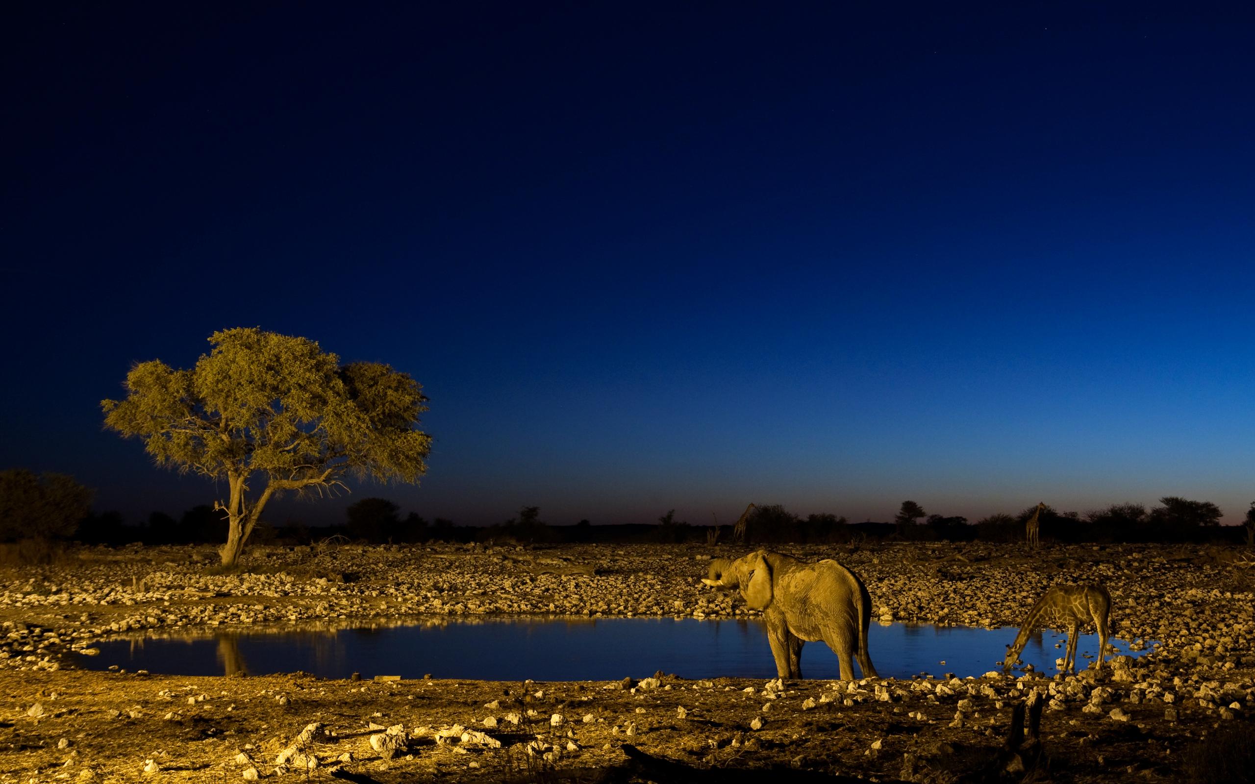 природа животные пустыня  № 3146249  скачать