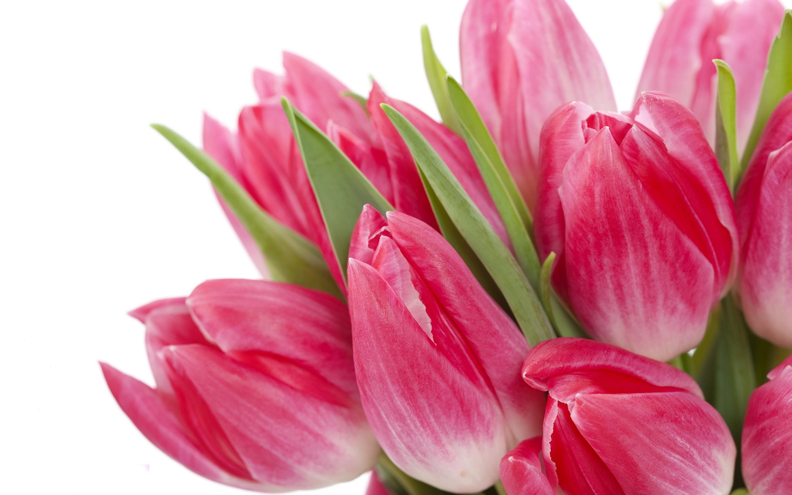 букет,тюльпаны,листья  № 415740  скачать