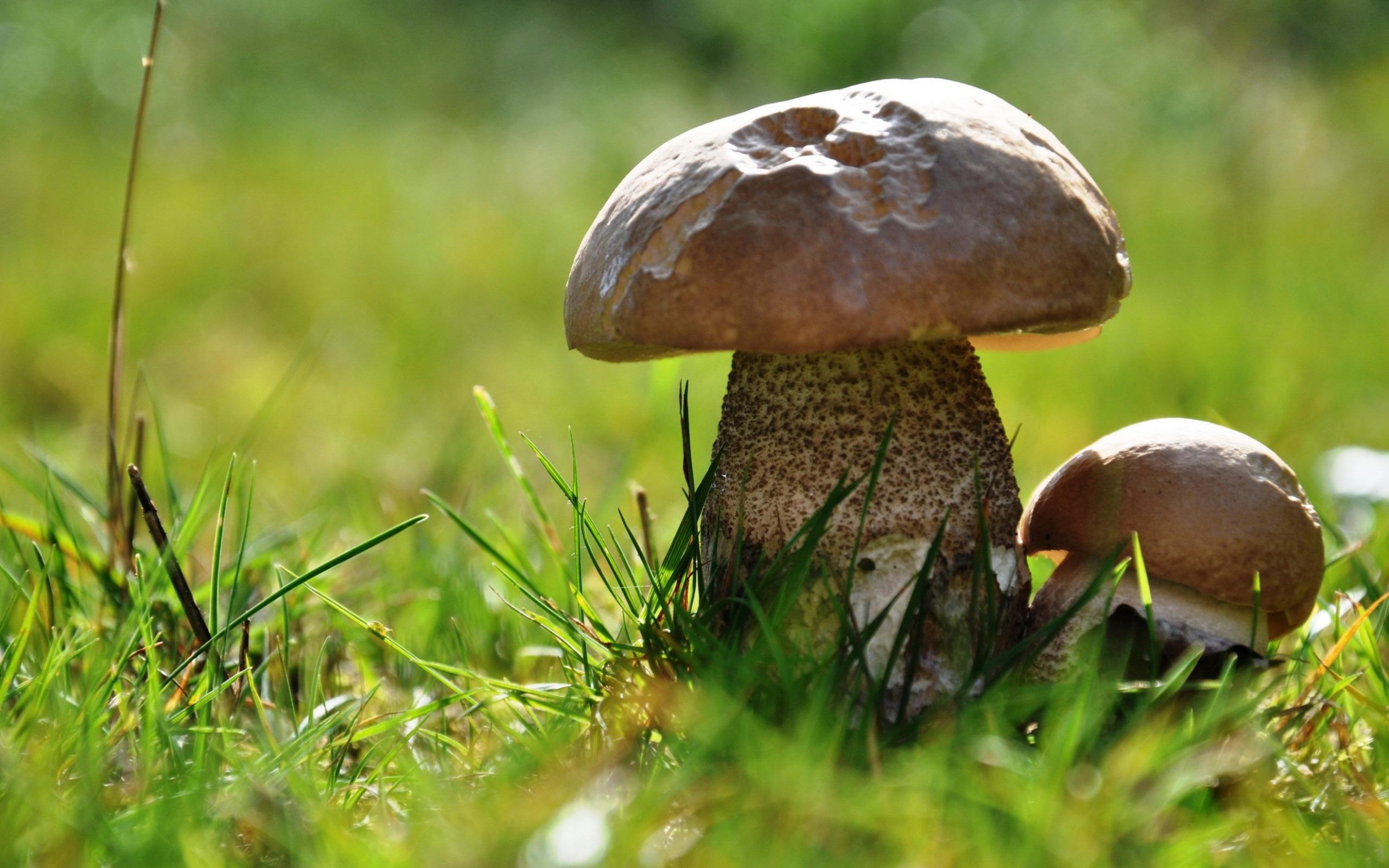 Прозрачный гриб  № 3337690 загрузить