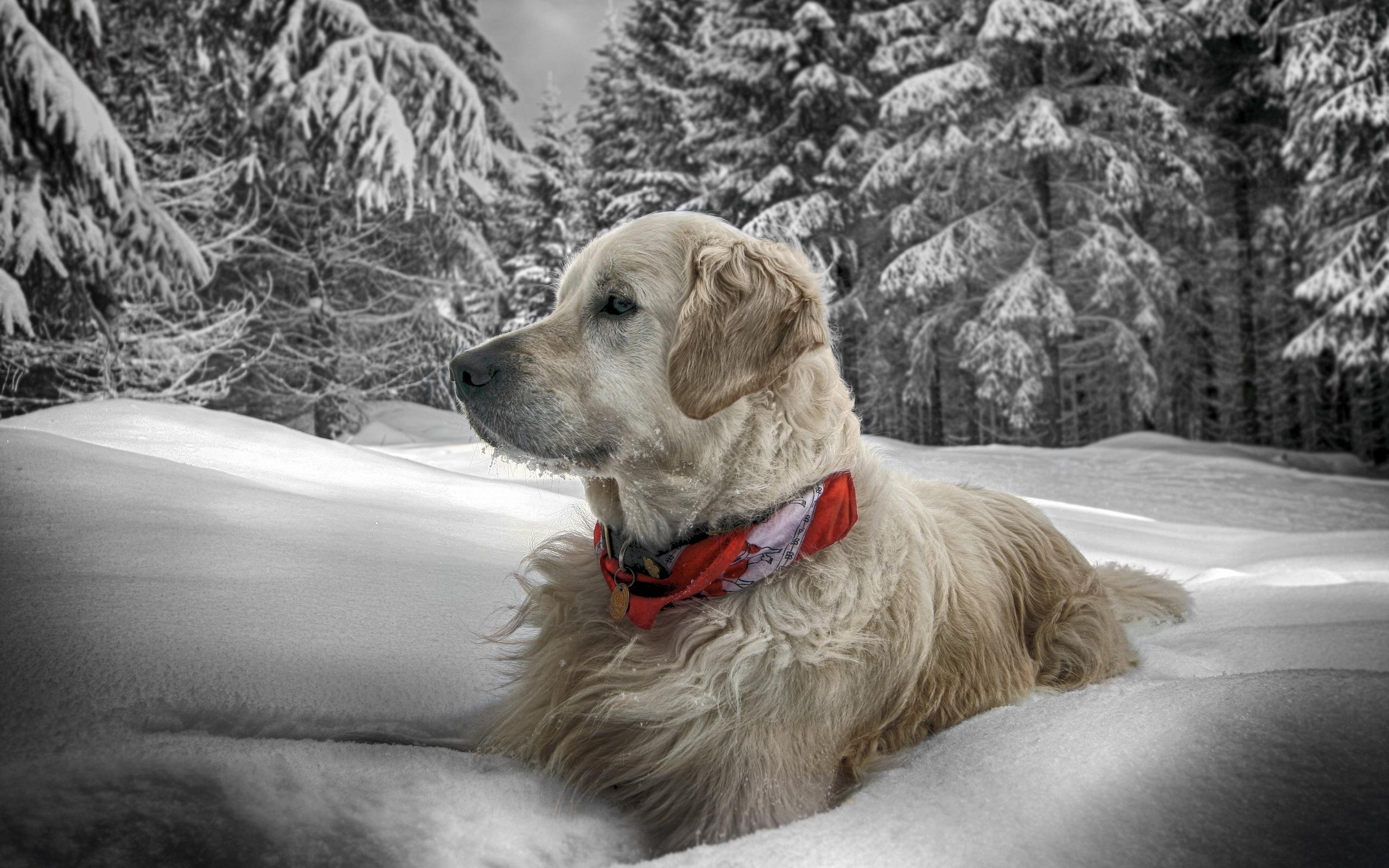 щенок снег puppy snow  № 2001738  скачать