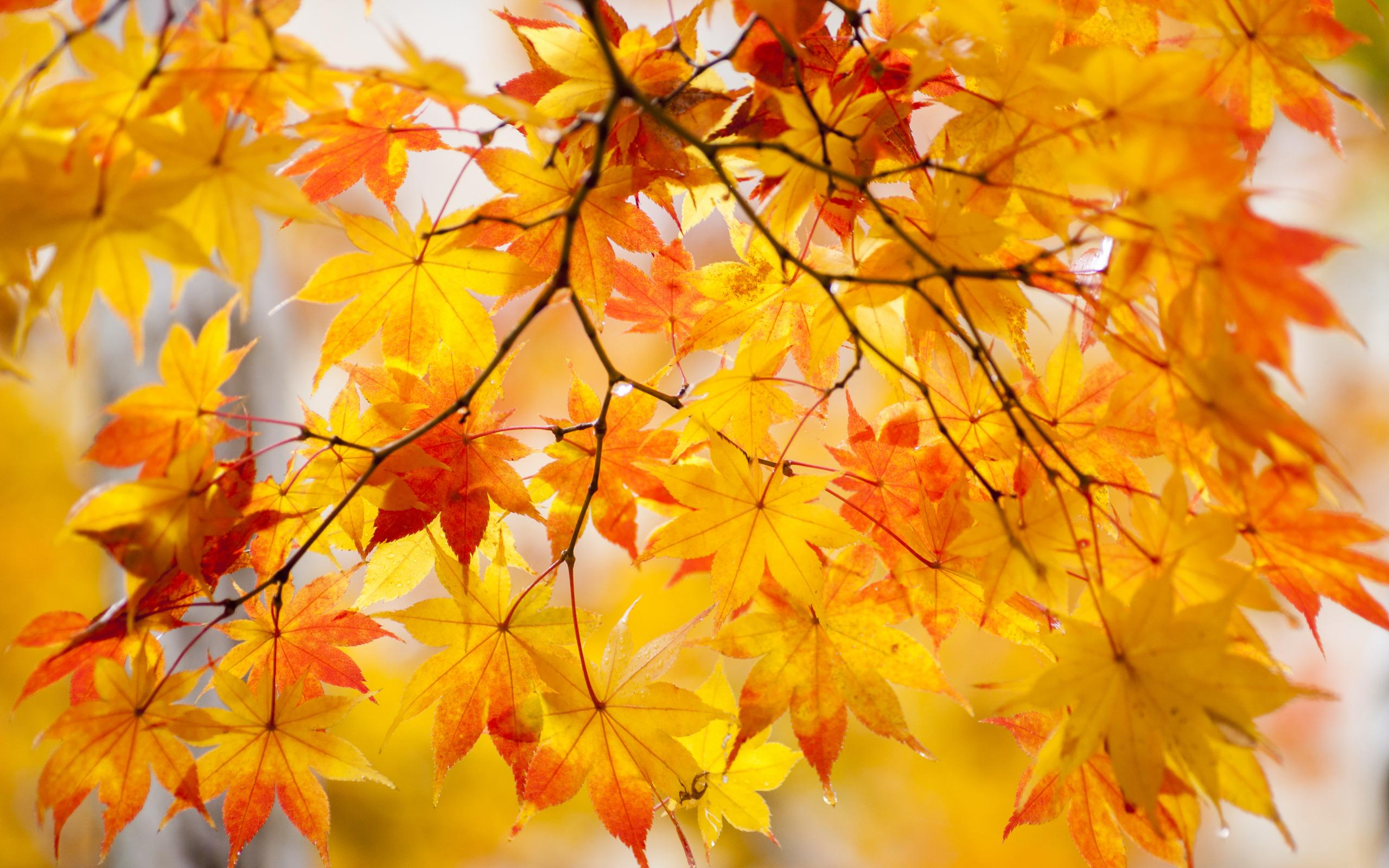 Картинки для рабочего стола яркая осень