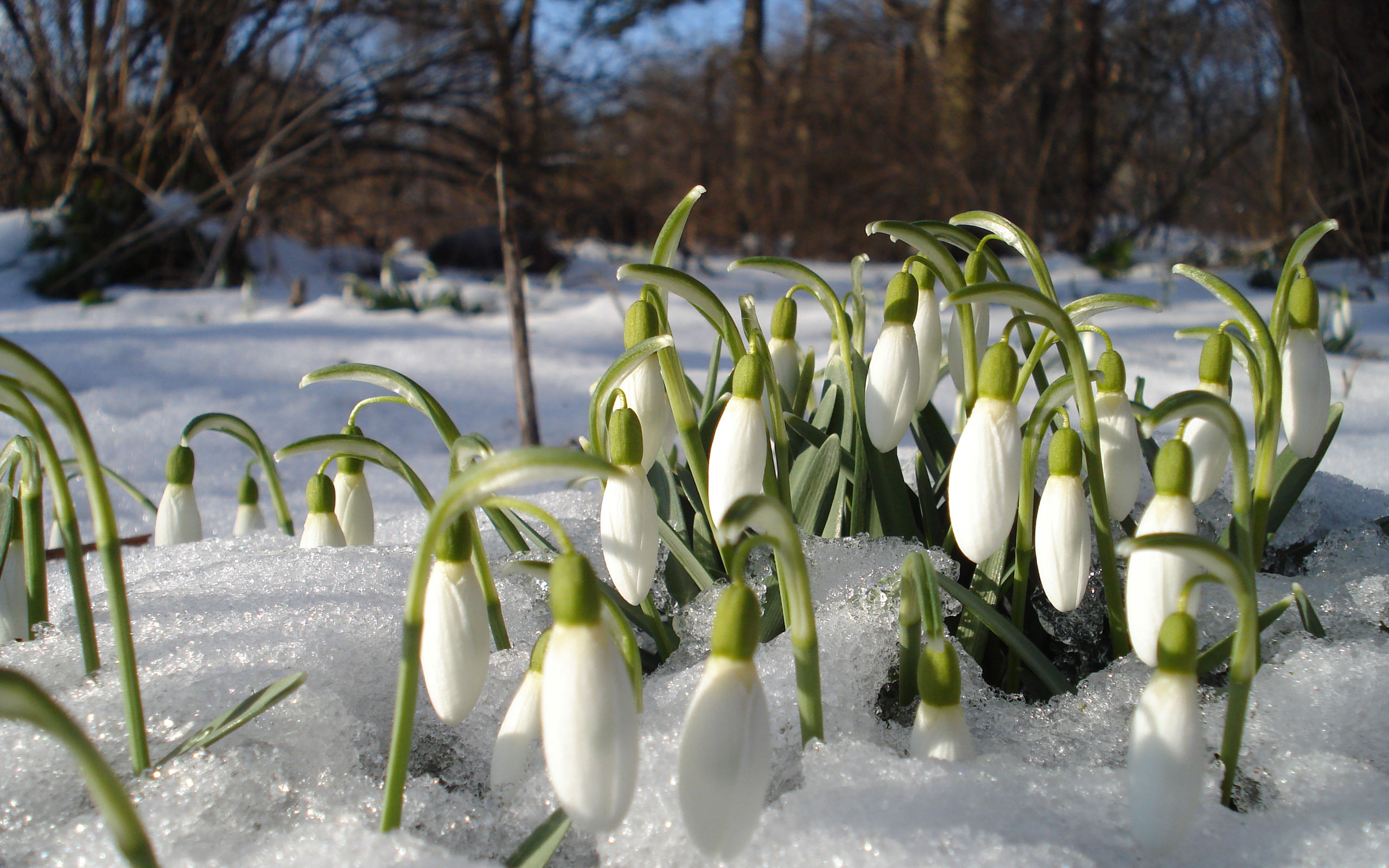 Утра, картинки для рабочего стола весна на весь экран природа