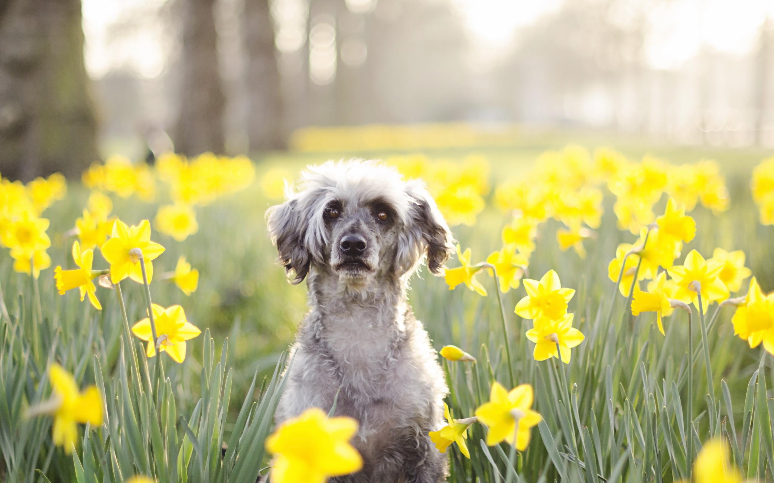 Собаки в картинках весна
