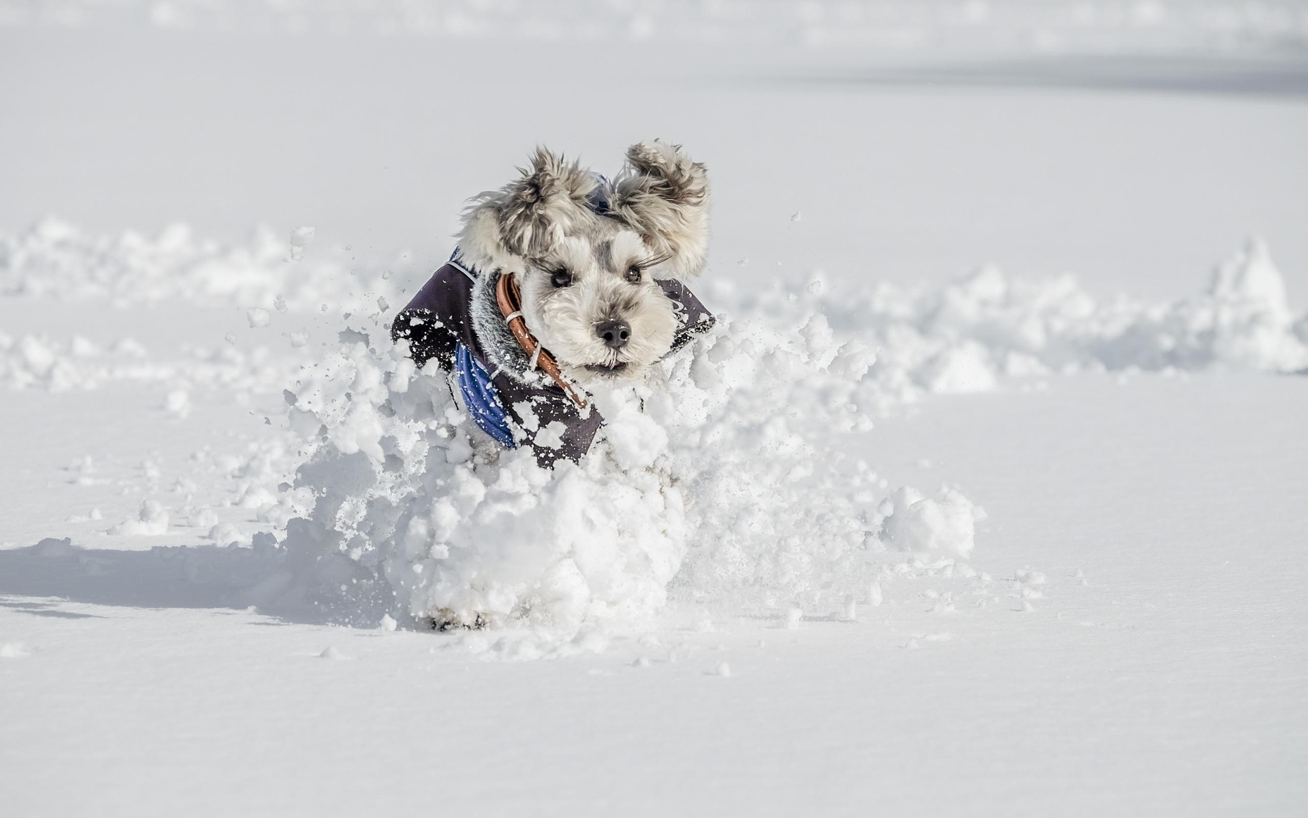 щенок снег puppy snow  № 2001766 без смс