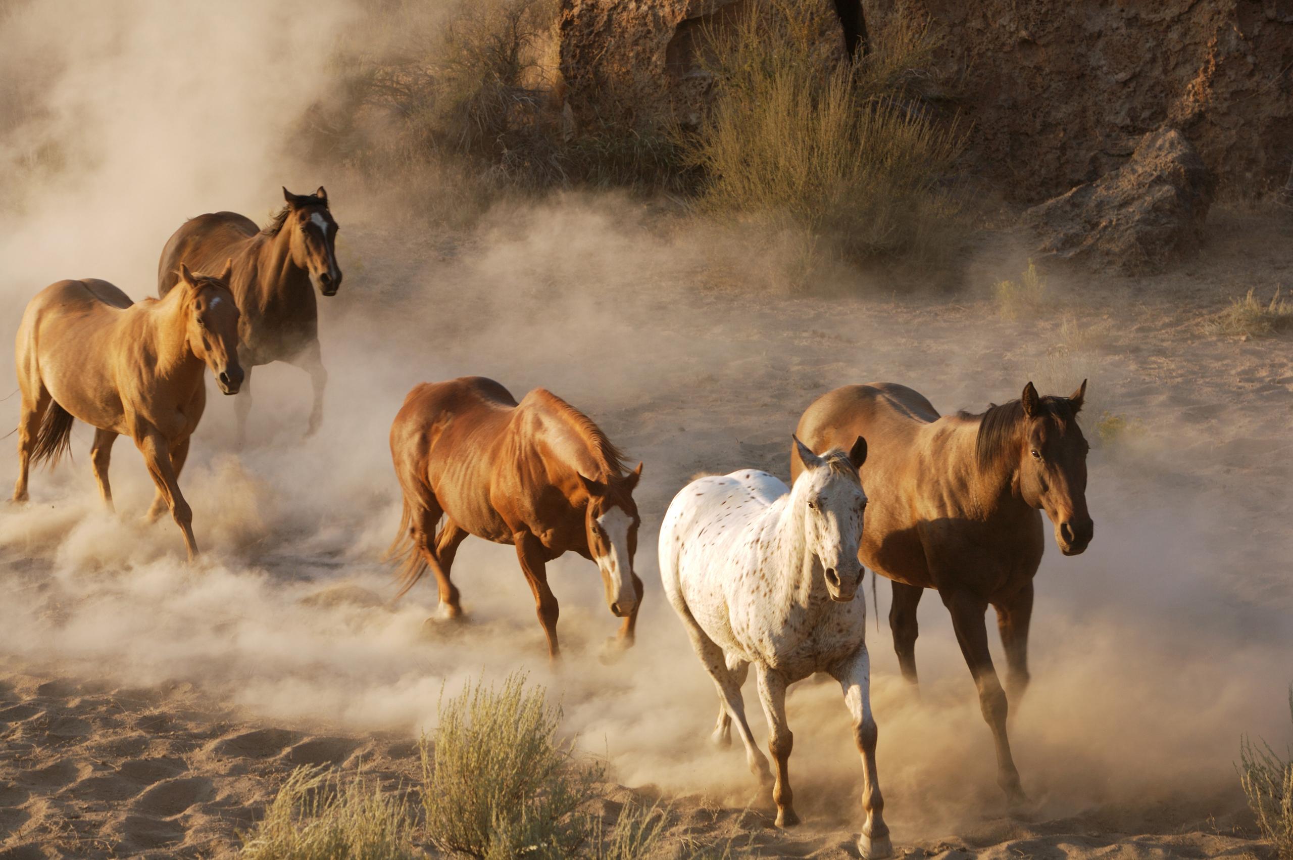 Обои для рабочего стола лошади на природе