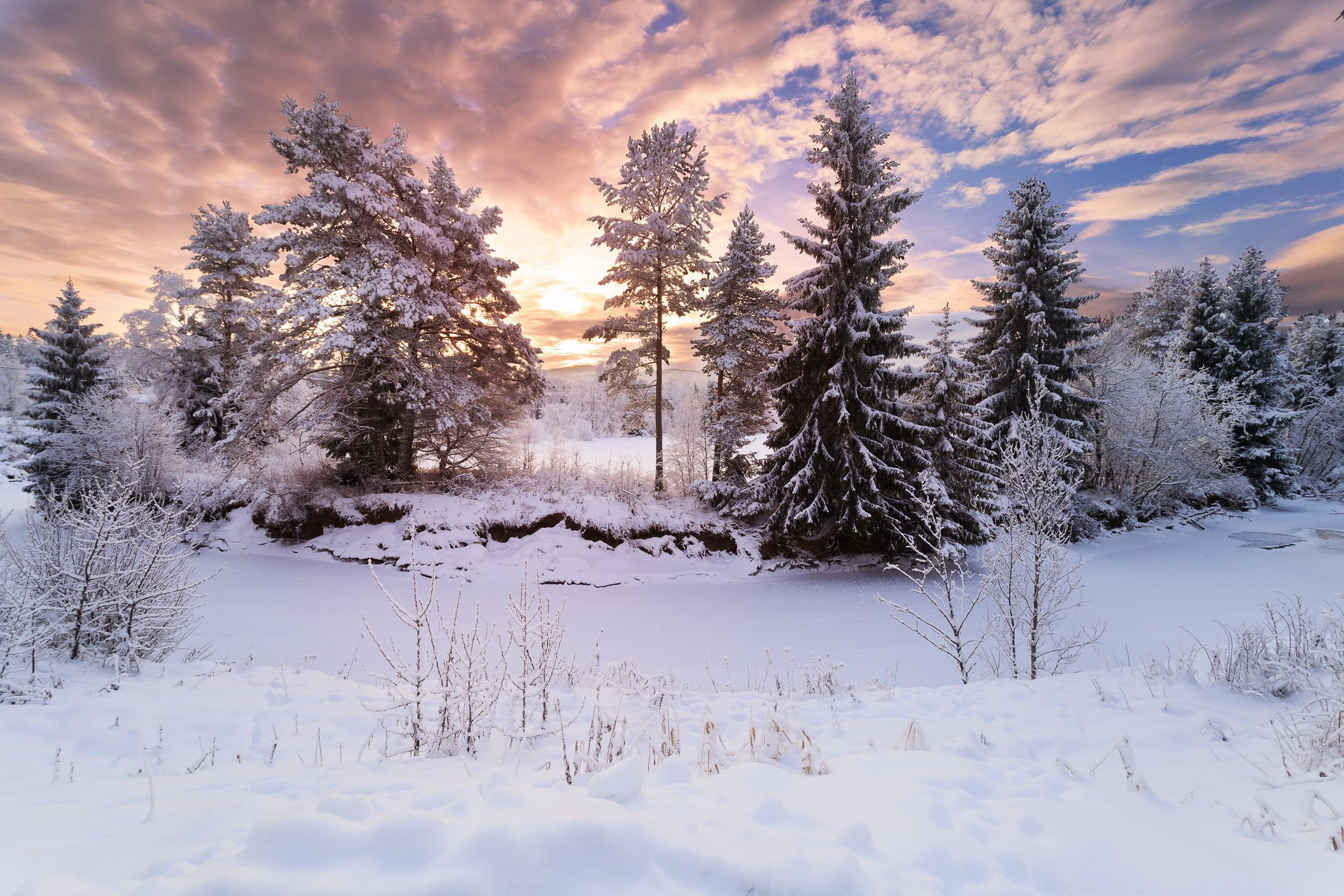Красивый зимний пейзаж картинки в лесу, поздравление днем учителя