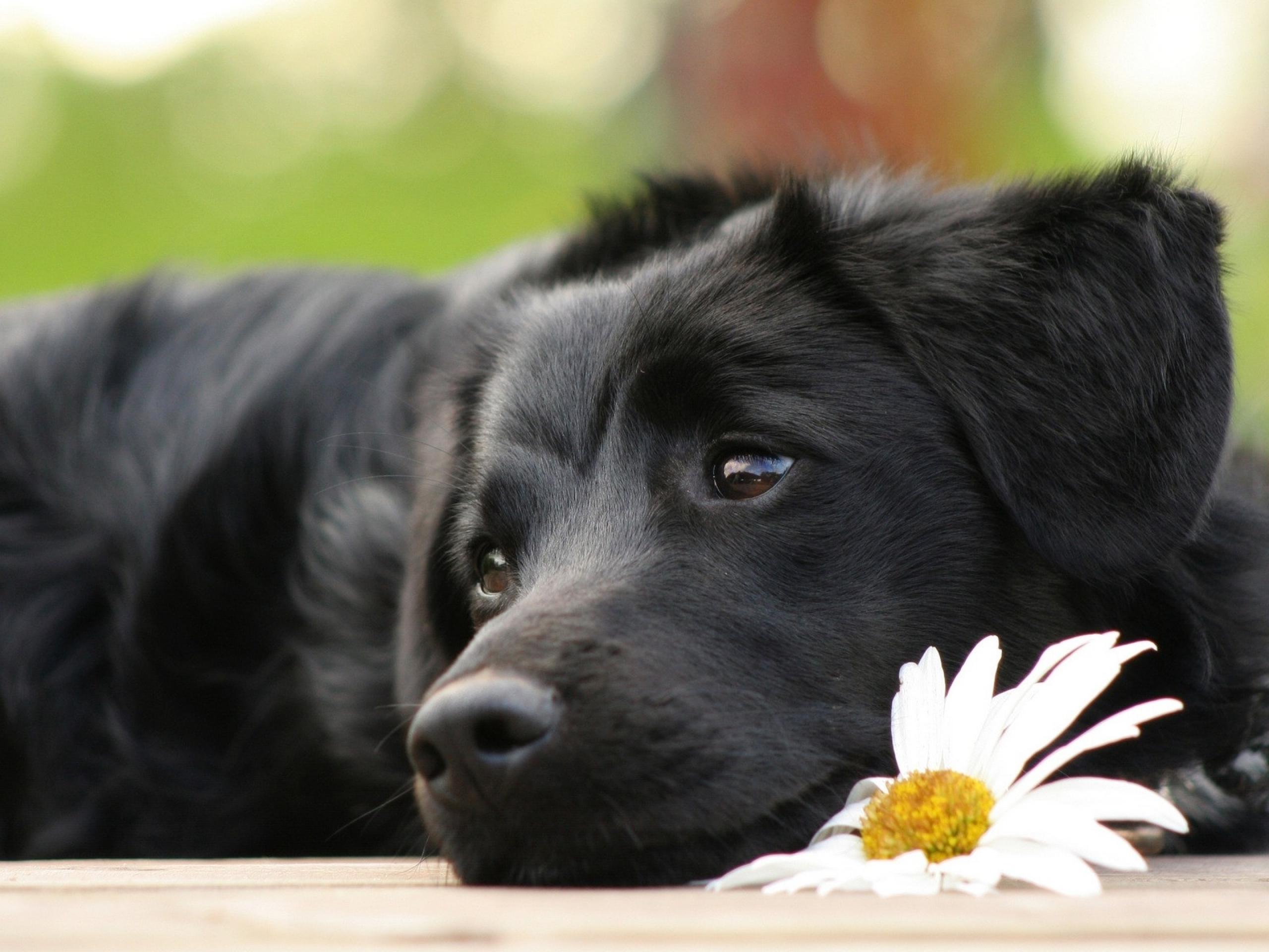 Черно-белый пес на полу  № 1157350 загрузить