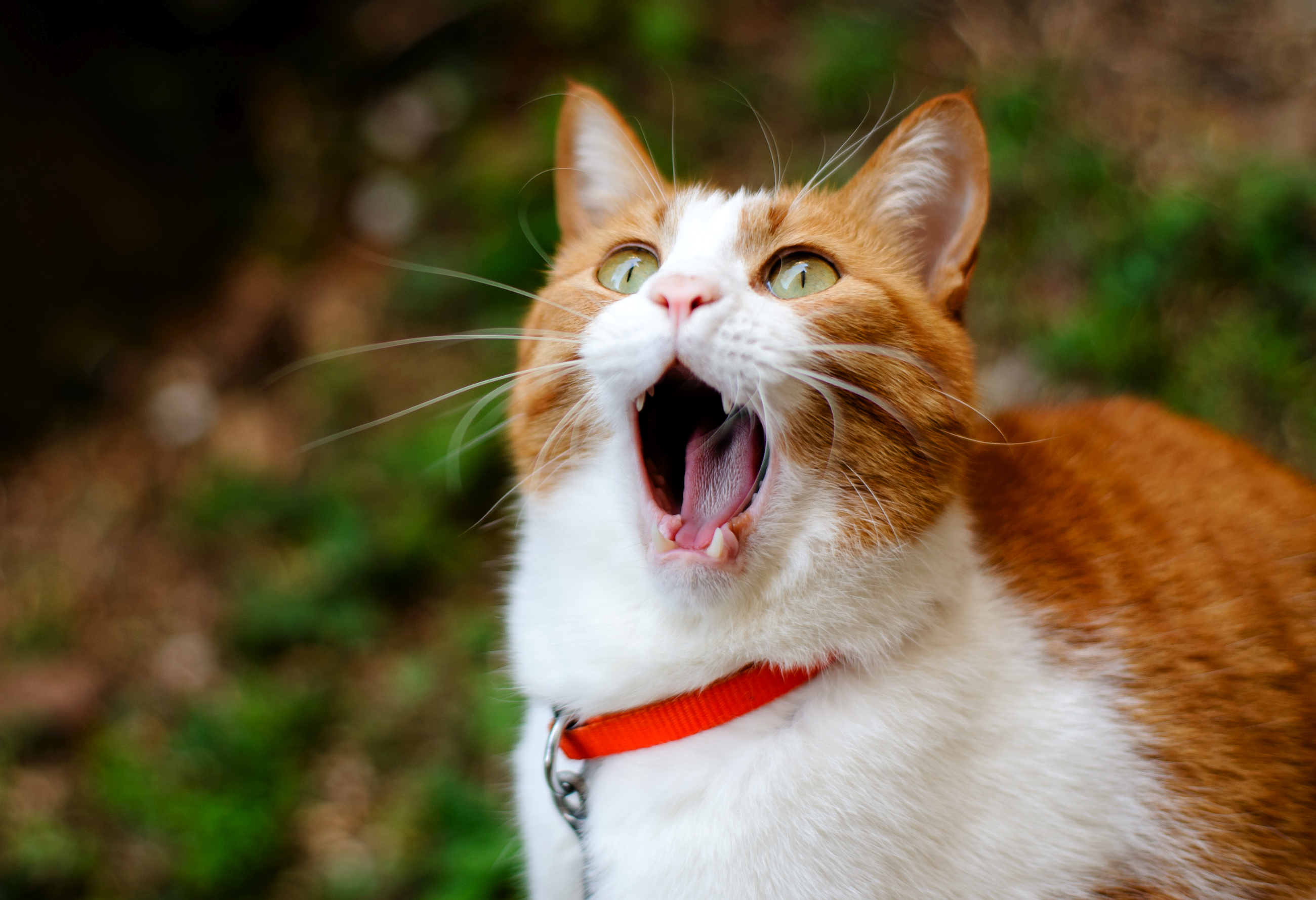 вымойте ржачные фото с кошками сами