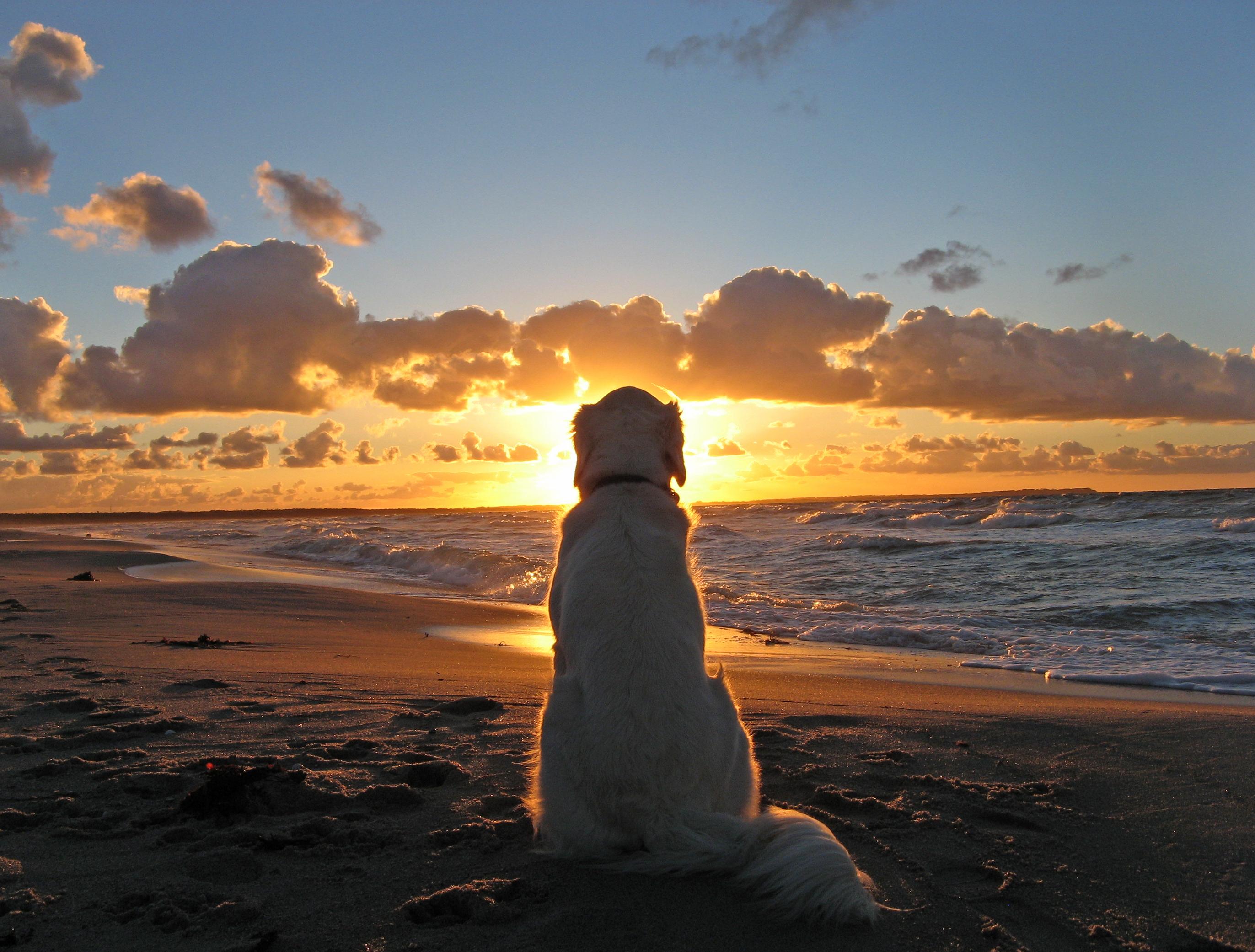 собака песок вода животное природа  № 956875 загрузить