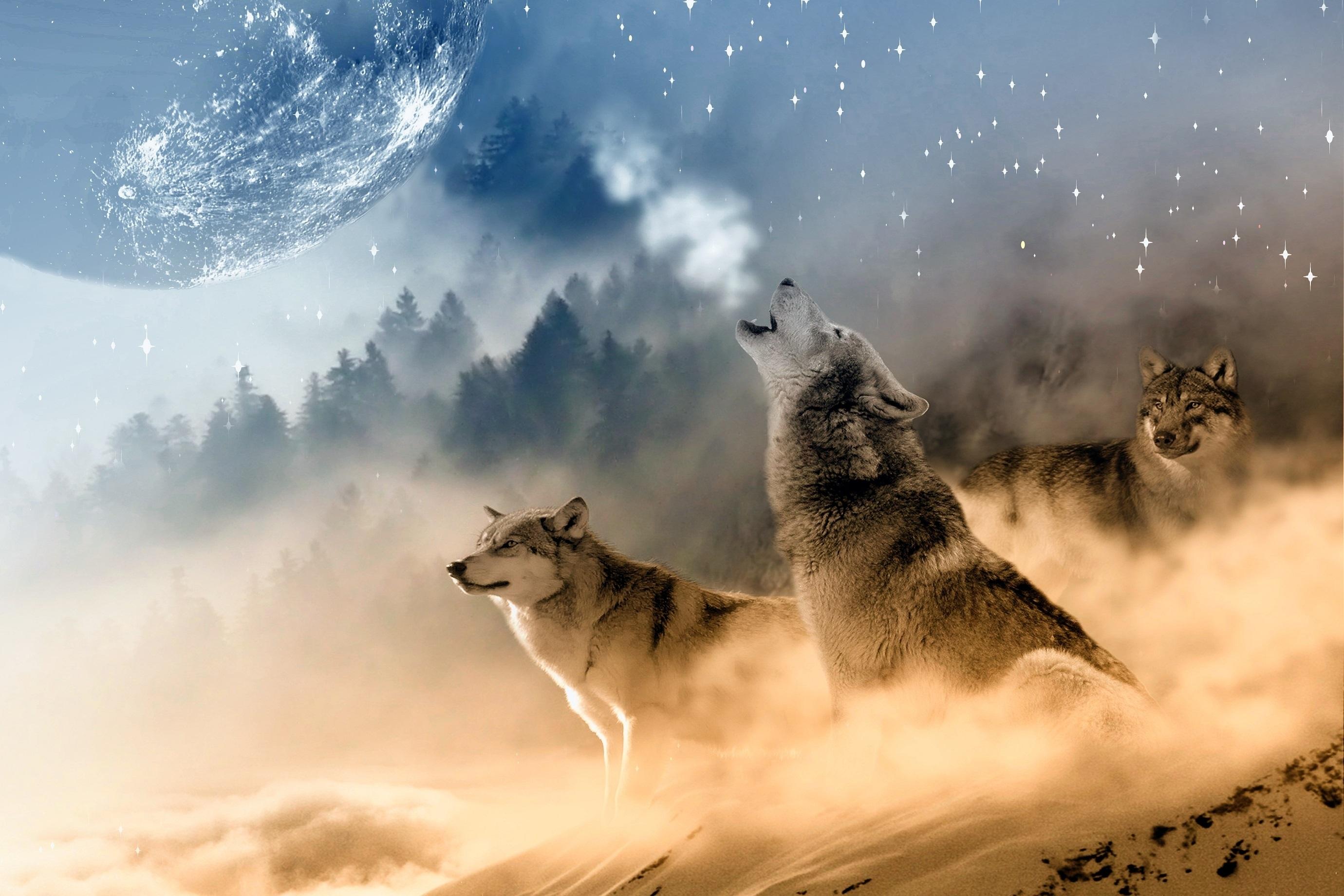 картинки волк высокое разрешение форм металла позволяет