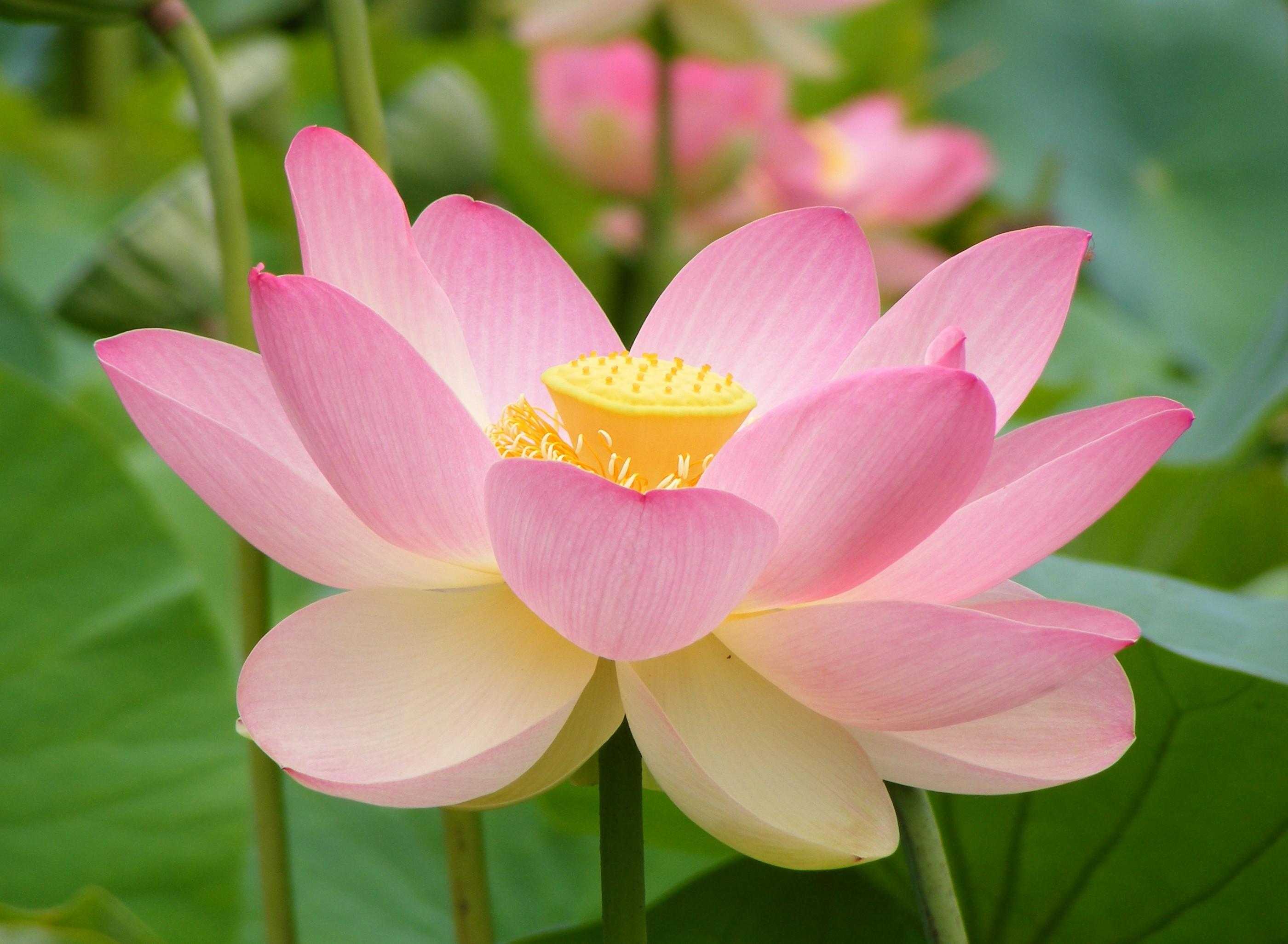 любом фото самого красивого цветка в мире символы того, что