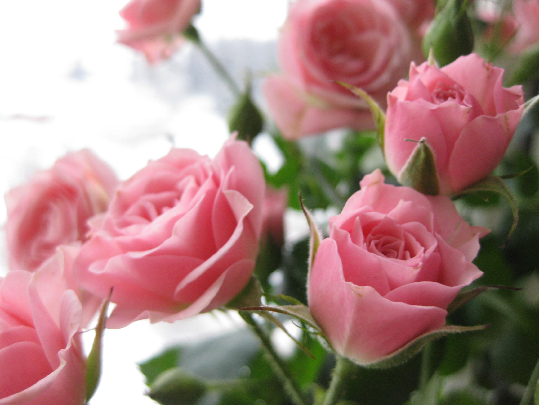 Букет роз обои на рабочий стол в высоком качестве