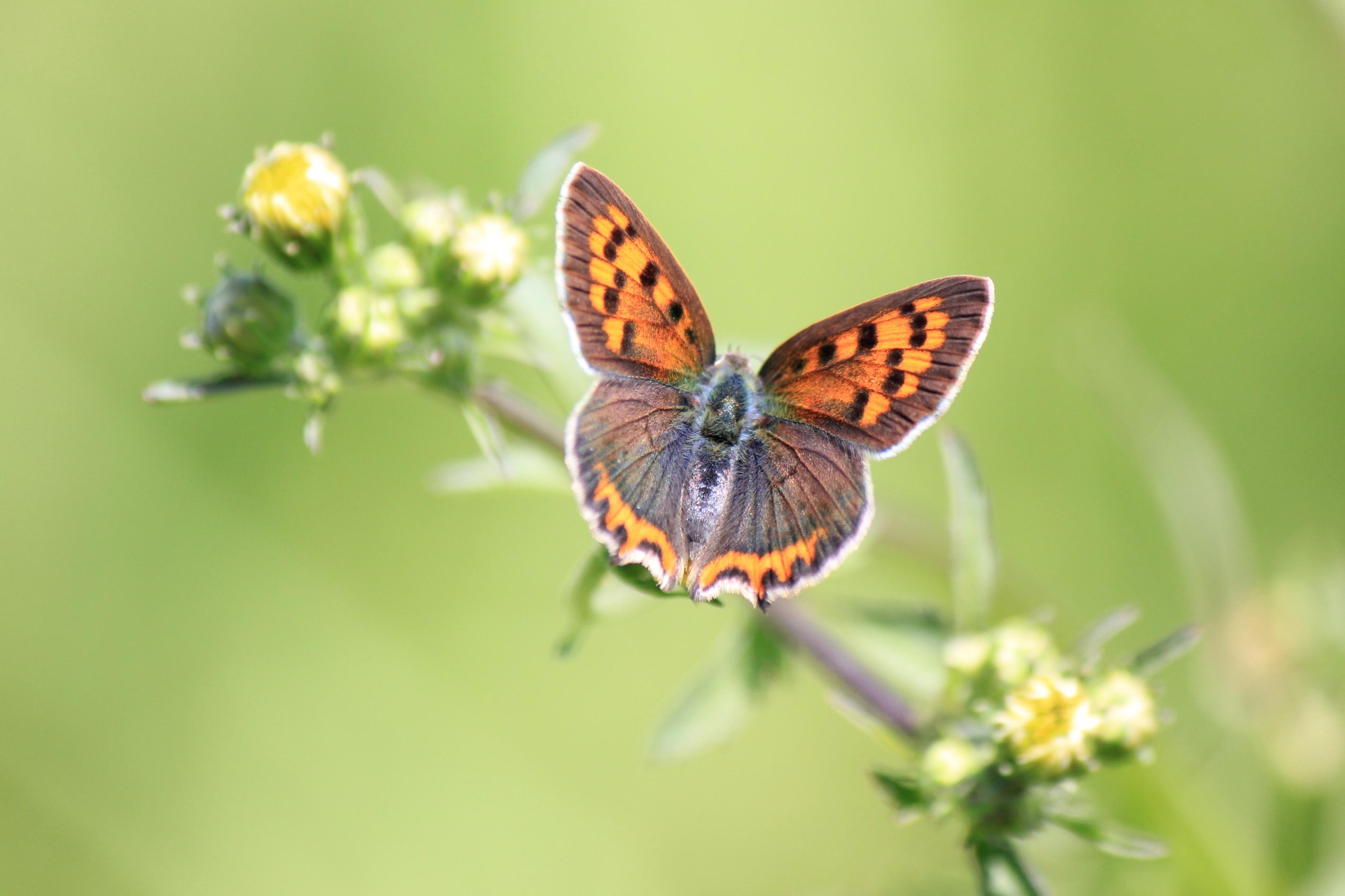 цветы,желтые,бабочка  № 664834  скачать