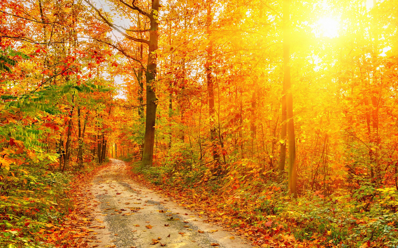 солнечная осень  № 44174 без смс