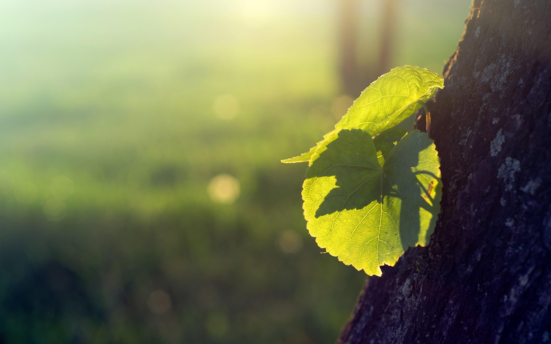Лучи света сквозь листья  № 3096178  скачать