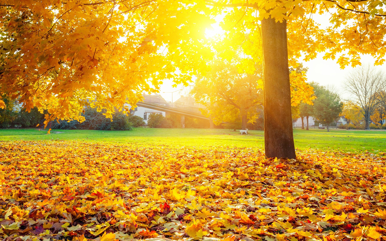 фото осень золотая хорошем качестве самой