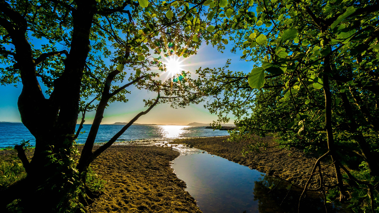 природа река солнце деревья  № 198696 бесплатно