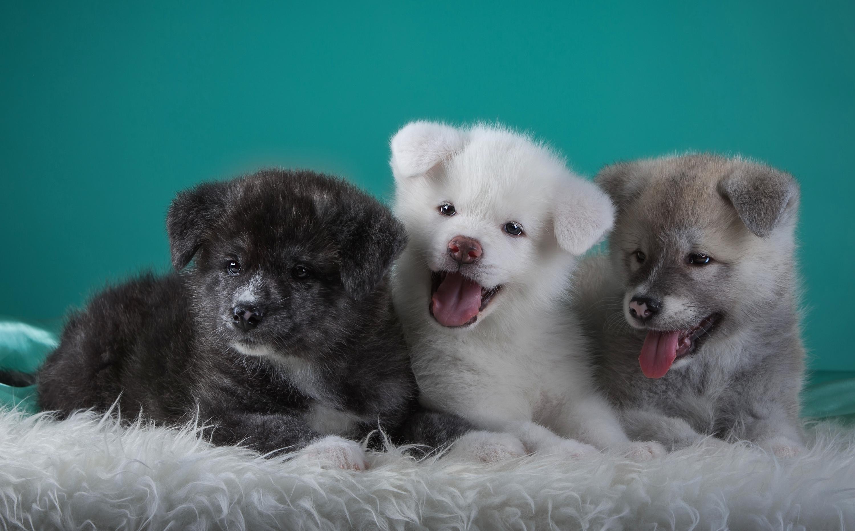 милые собаки  № 688101 бесплатно