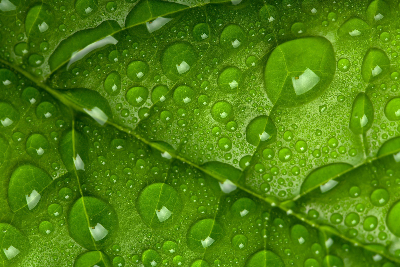 зеленый фон капли свет  № 3258038 без смс