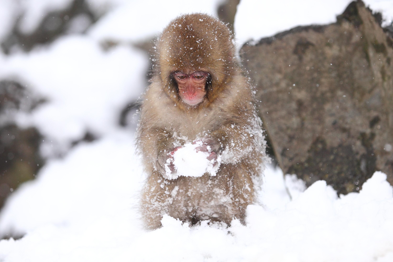 весь в снегу прикольные картинки чаще, люби больше