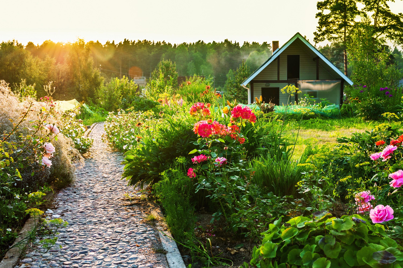 луг сад дворик трава  № 2691573 без смс