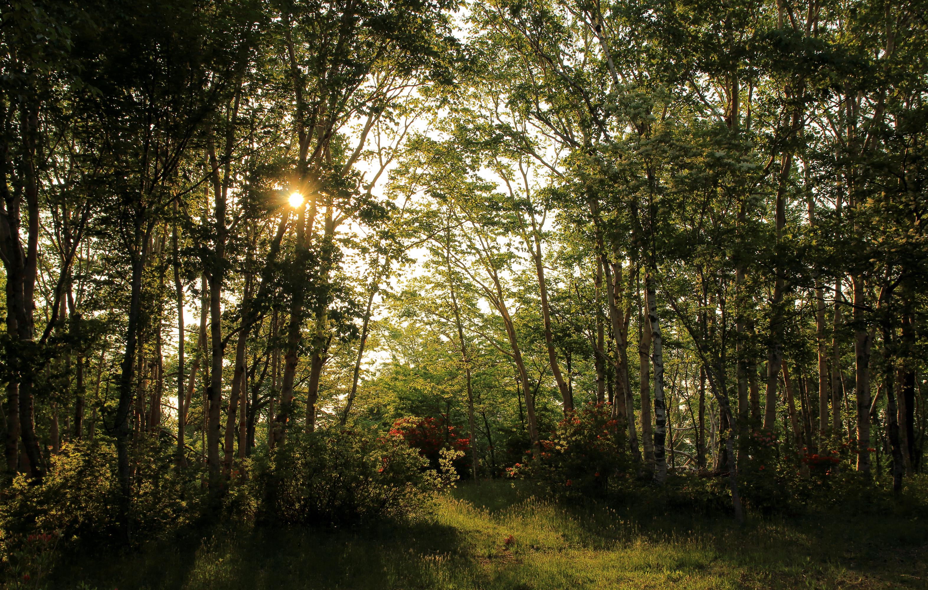 картинки с кустами в лесу жизнь
