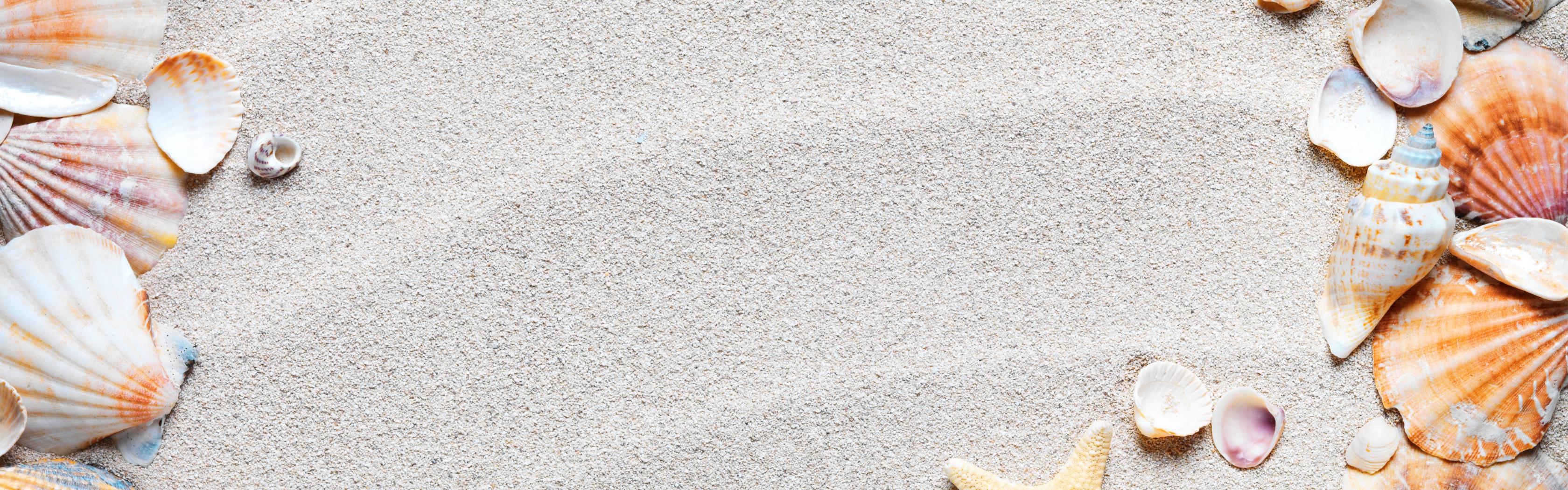 Картинка ракушки для текста