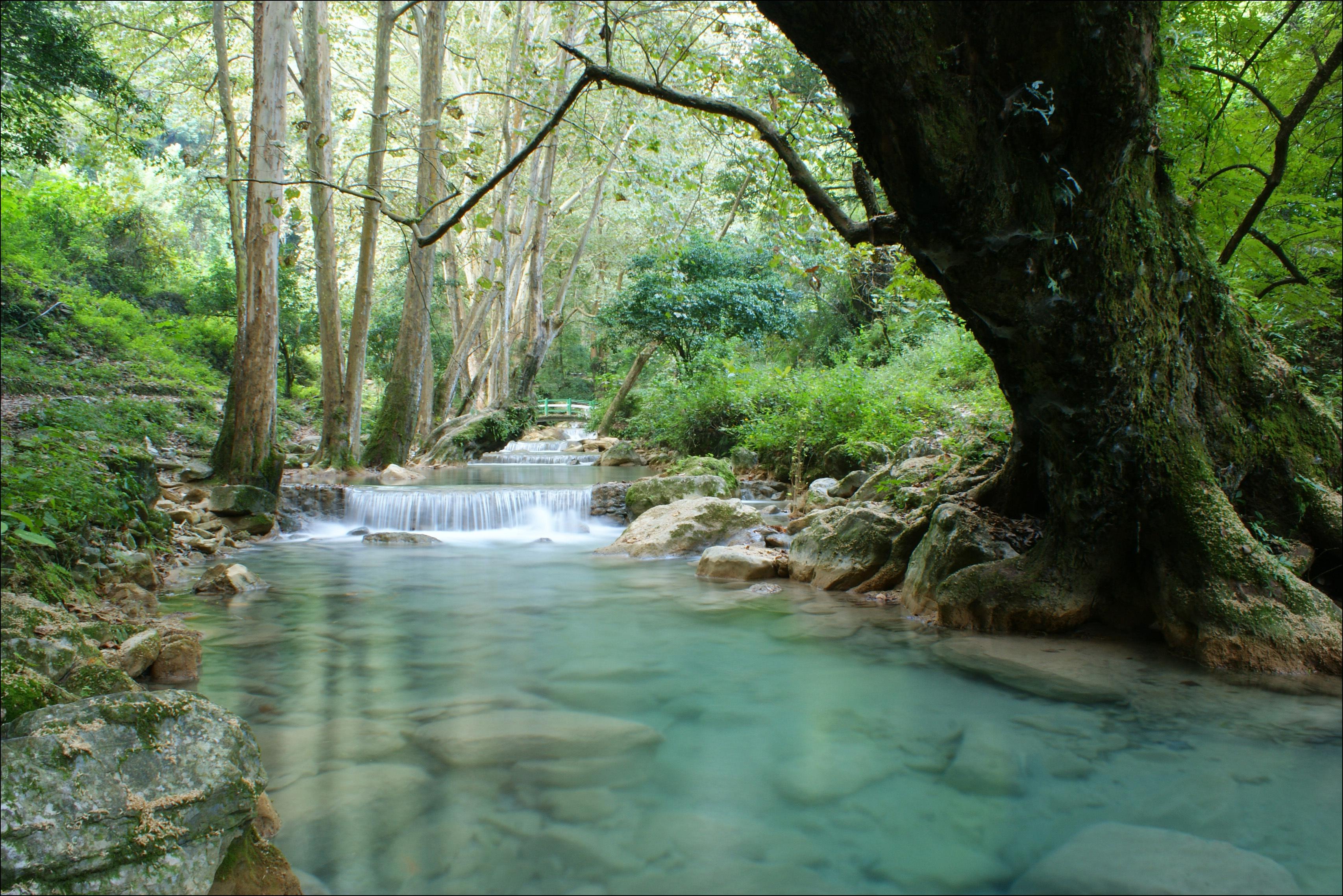 природа река водопад лес деревья nature river waterfall forest trees  № 484084 загрузить