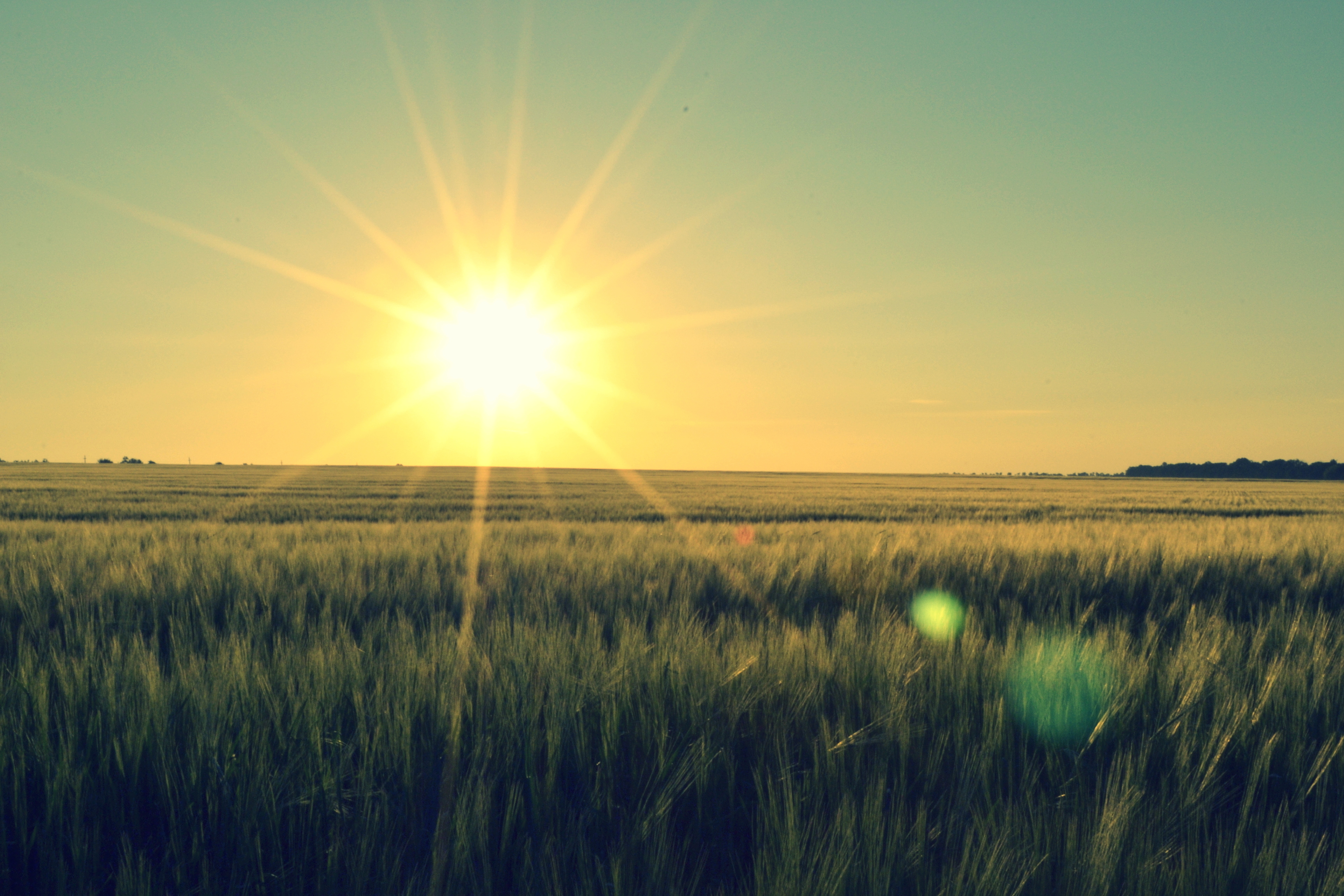 Восход солнца на окраине леса  № 1409512 без смс