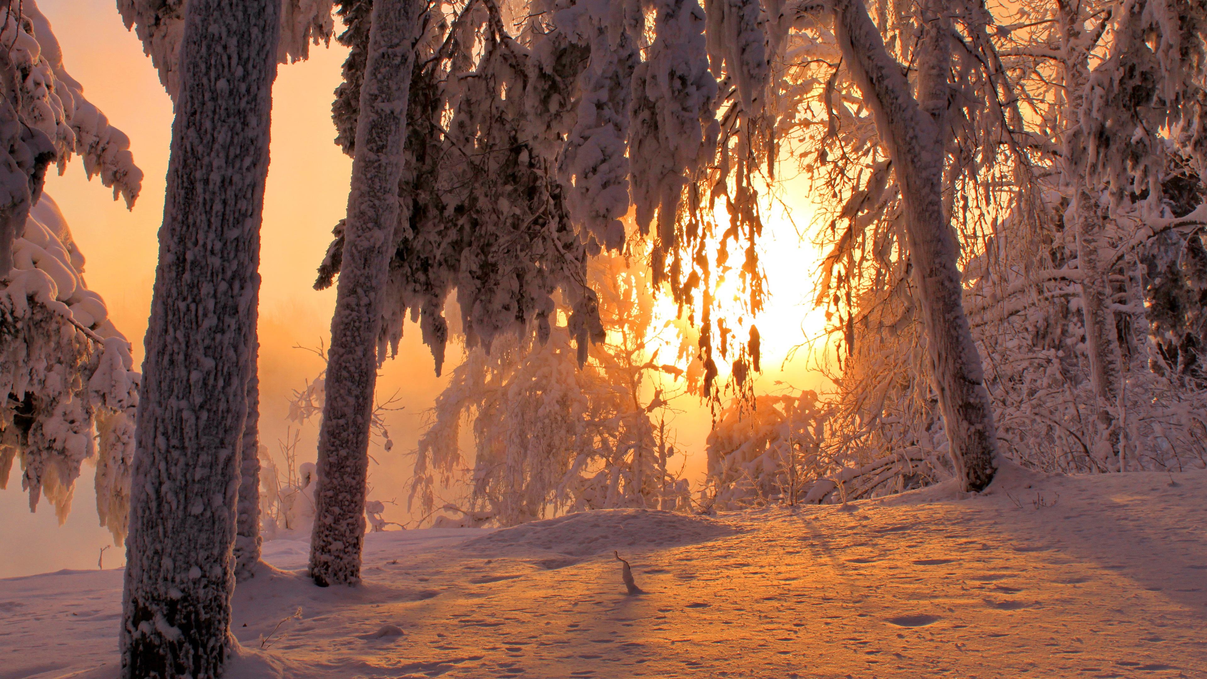 лес в снегу под солнцем фото очень большой контраст